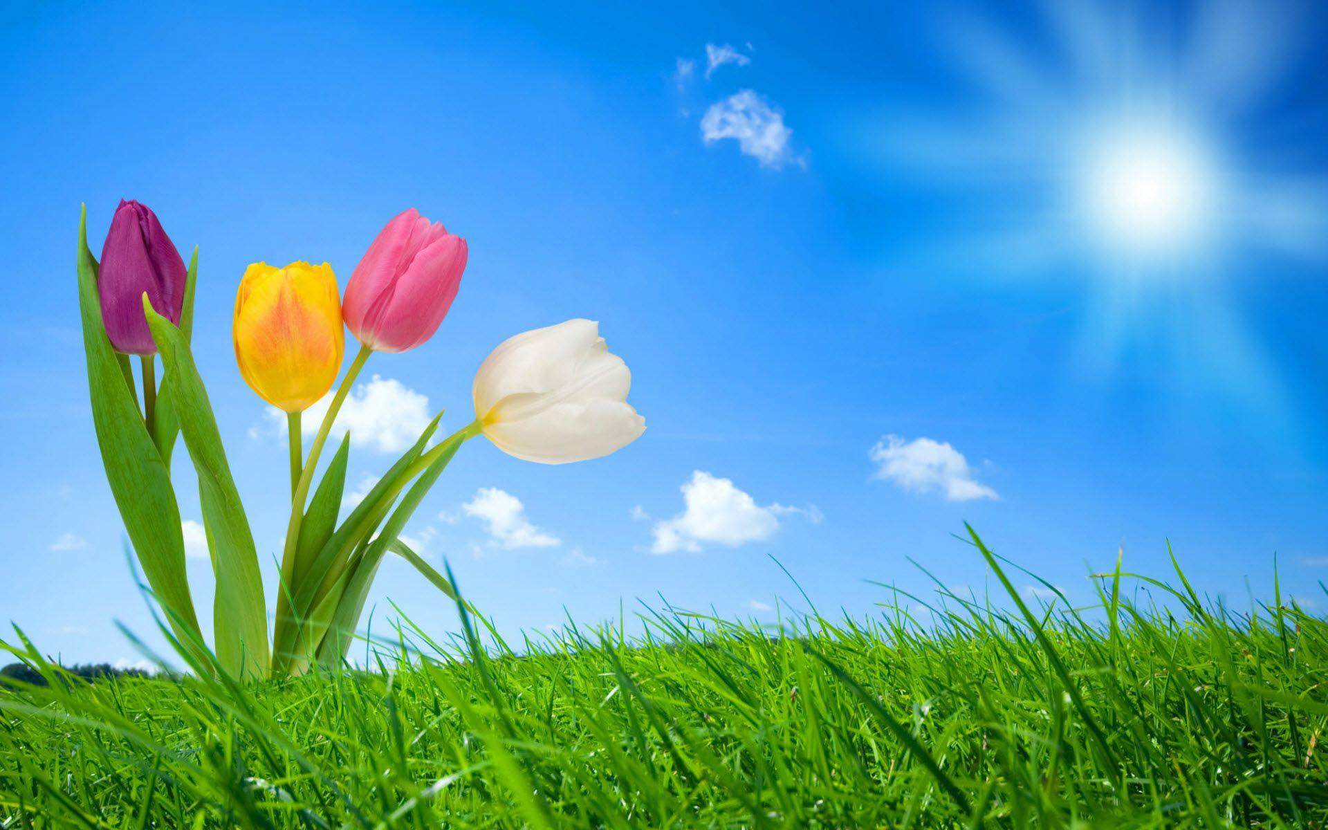 Spring Nature Wallpapers
