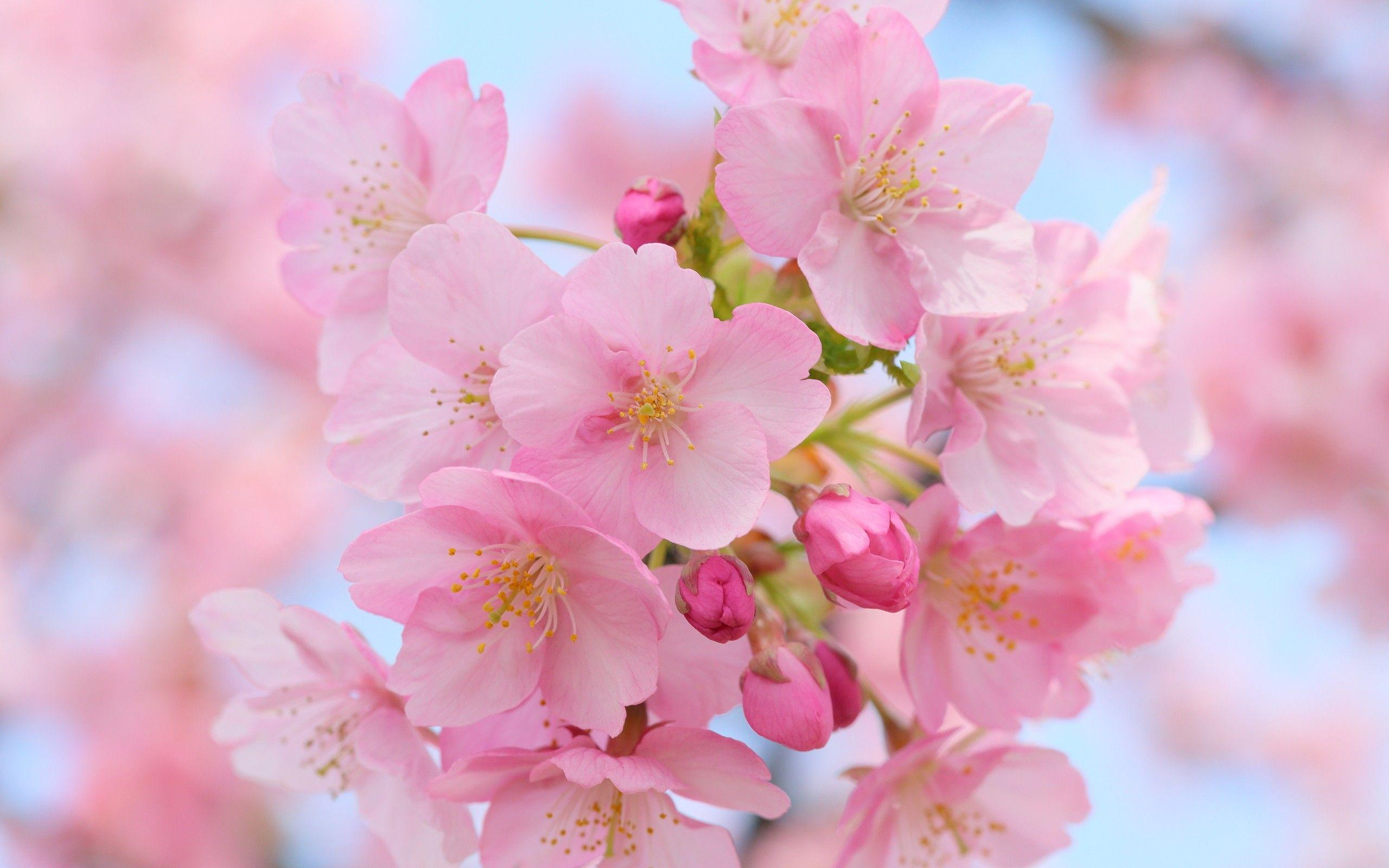 Flower: Coming Nature Flower Flowers Spring Wallpaper Windows 8 HD ...