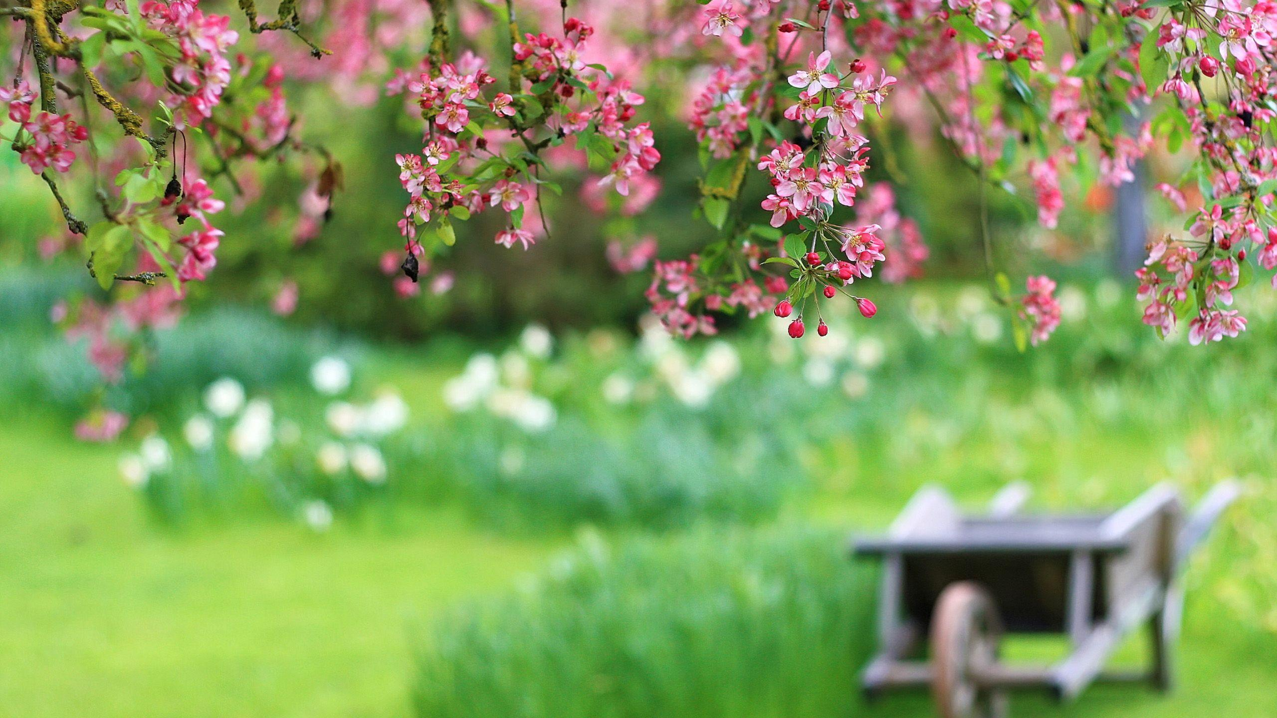 Nature Spring | Free Desktop Wallpapers for Widescreen, HD and Mobile