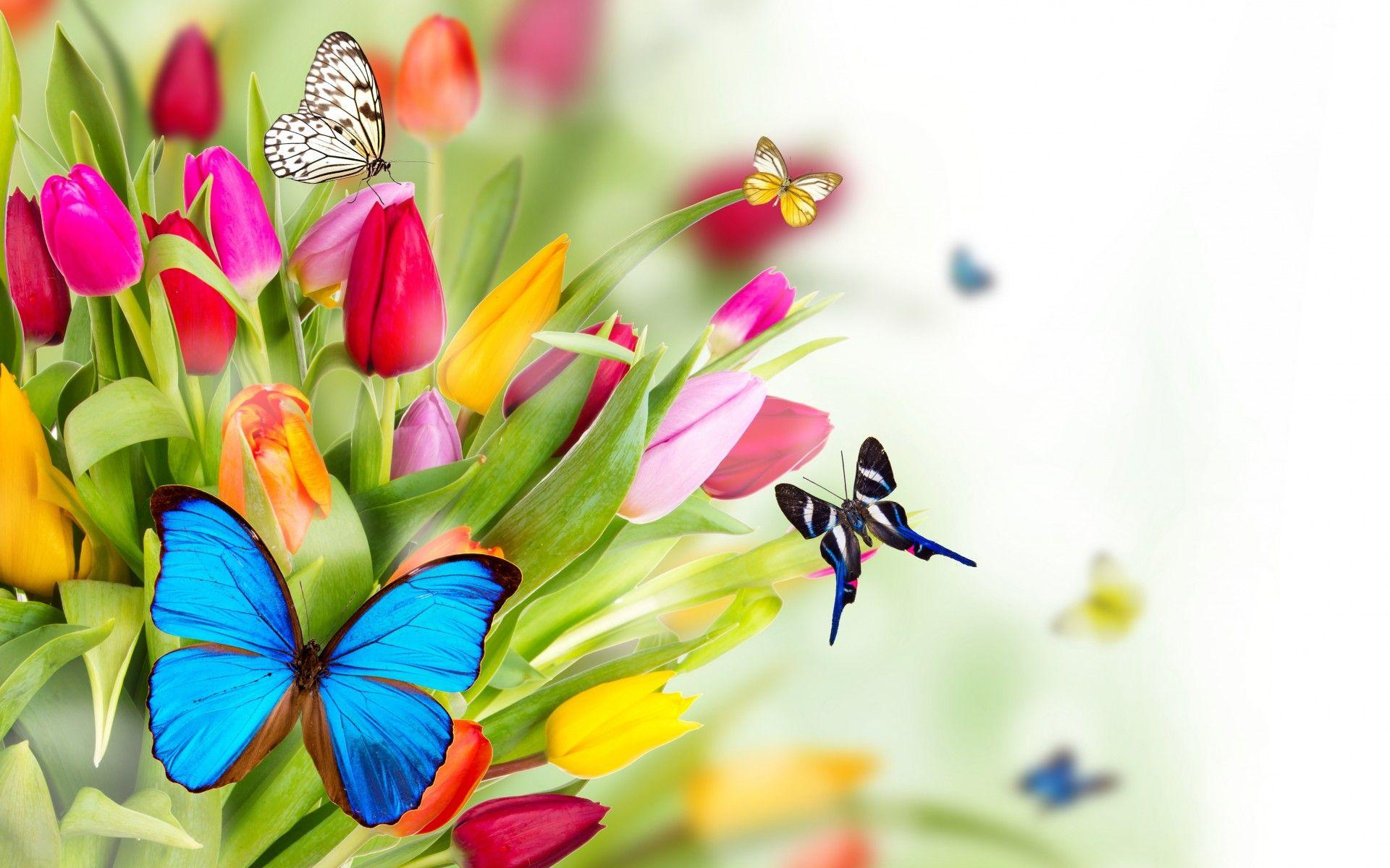 Flowers Wallpapers Pack Download V.83 - Wallpapers and Pictures ...