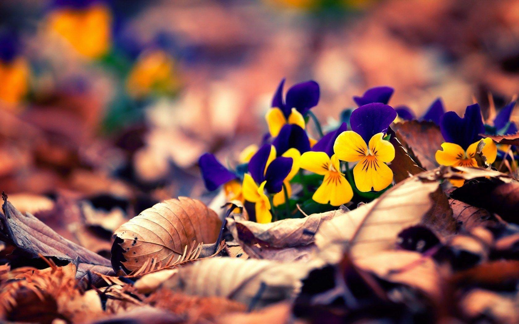 Spring Flowers Leaves Natural HD Wallpapers Wallpapers
