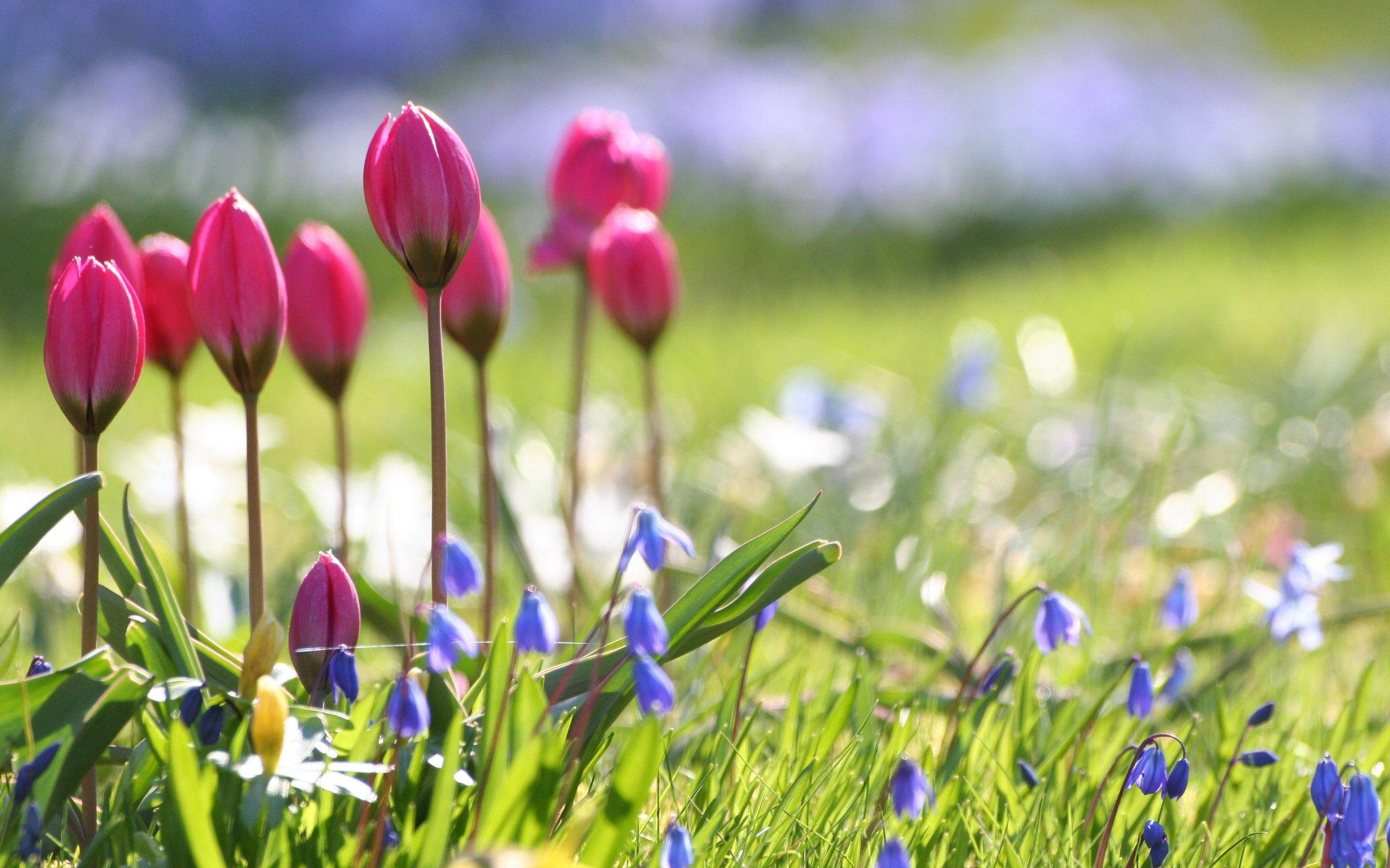 Spring Flowers Wallpapers & Pictures HD | flowers | Pinterest ...