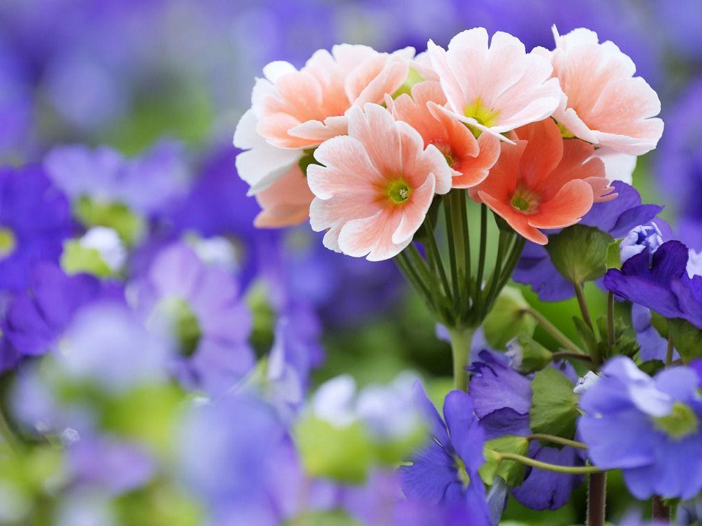 Spring Flowers Wallpapers HD Pictures – One HD Wallpaper Pictures ...