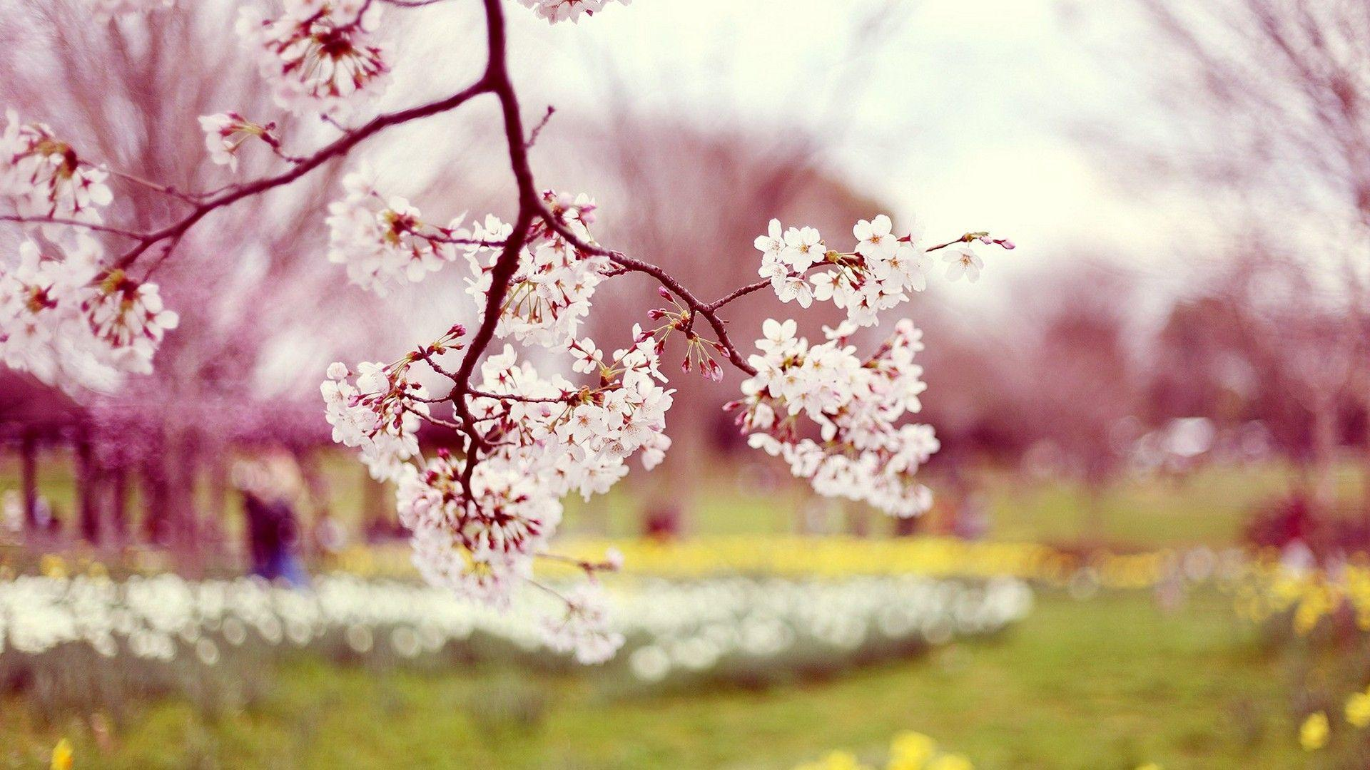 Desktop Wallpaper Beautiful Spring - 2018 Cute Screensavers