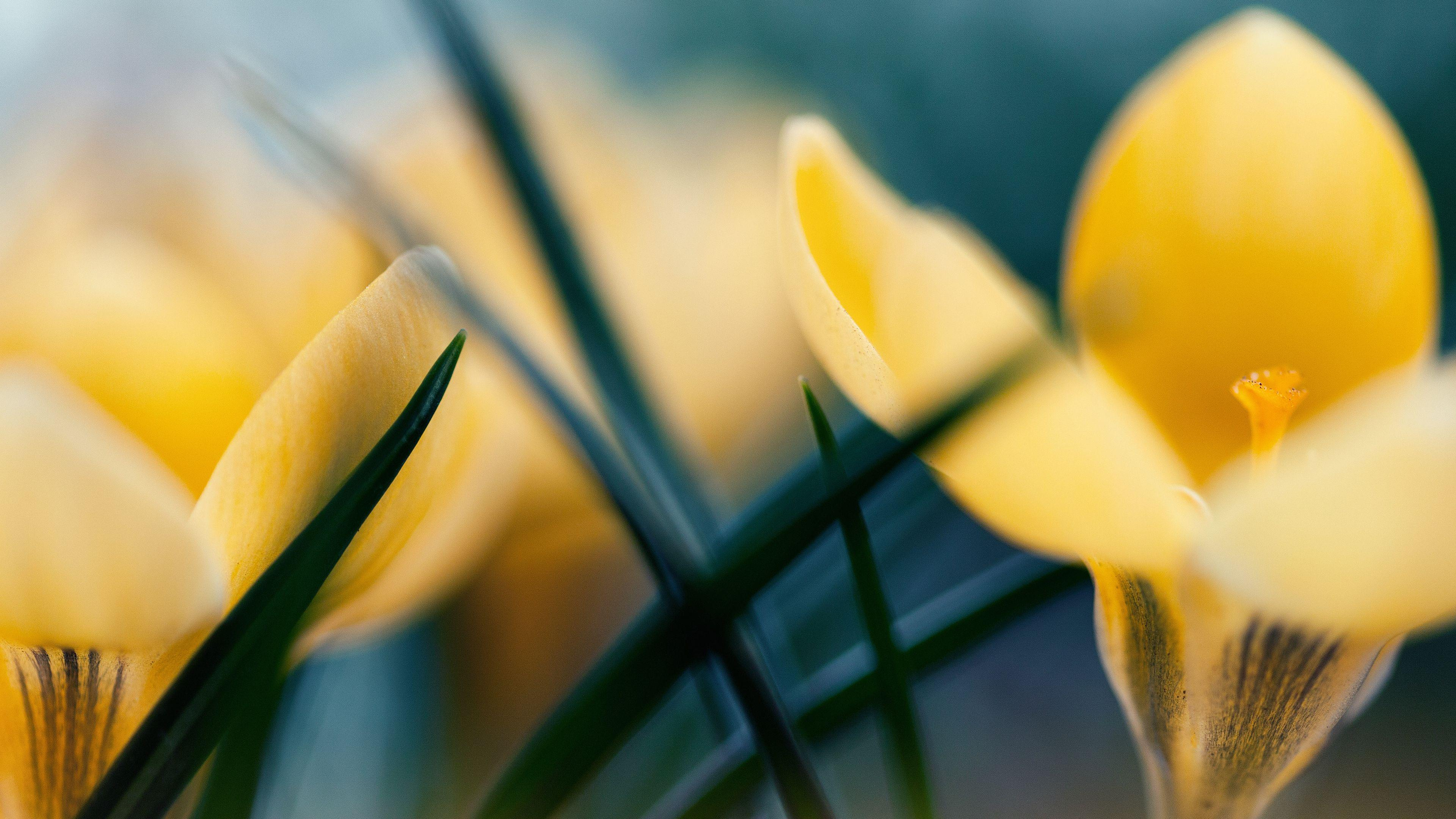 Beautiful Spring 2018 4k Background Wallpapers Download Free