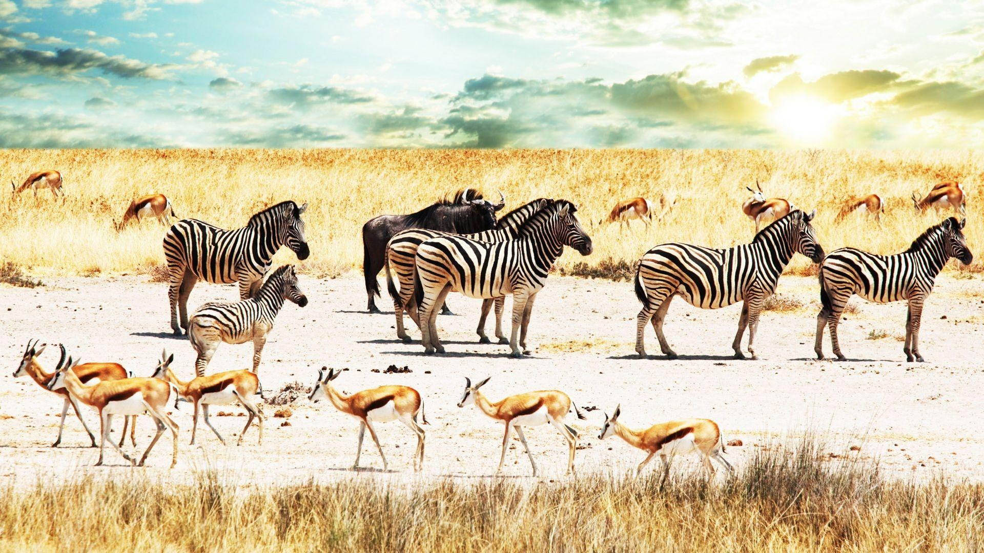 Africa-Zebra-and-Gazelle-Wallpapers-Wallpaper-1920×1080 – SA ...