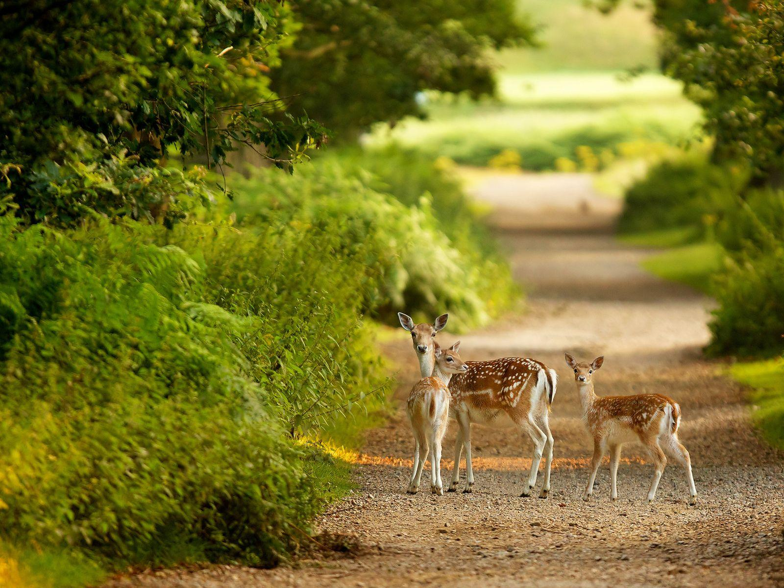 Cute Gazelle Family Looking at Camera HD Wallpaper | HD Nature ...