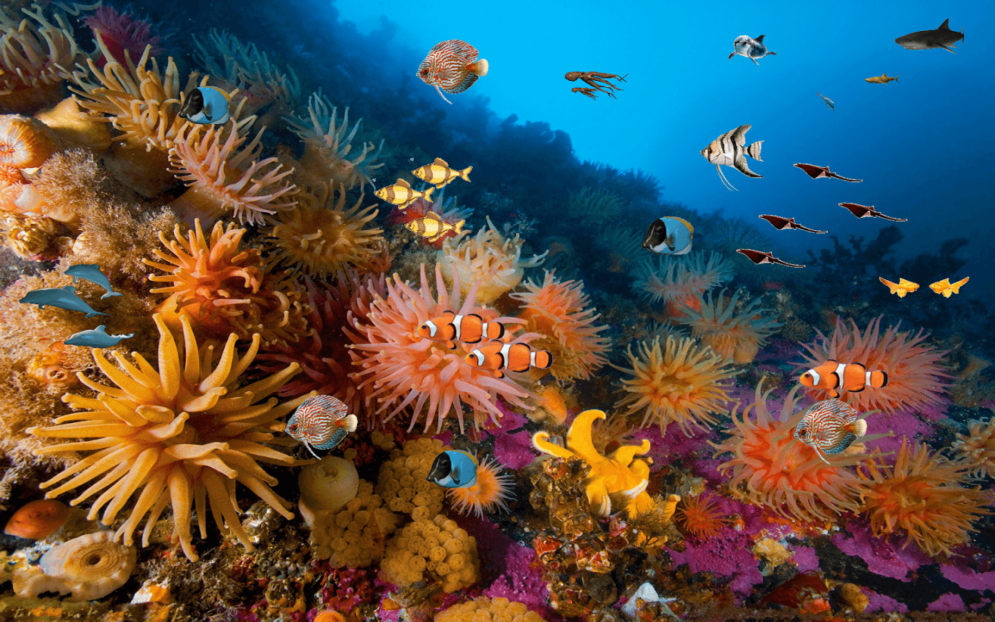 Coral reefs wallpapers wallpaper cave - Sea coral wallpaper ...