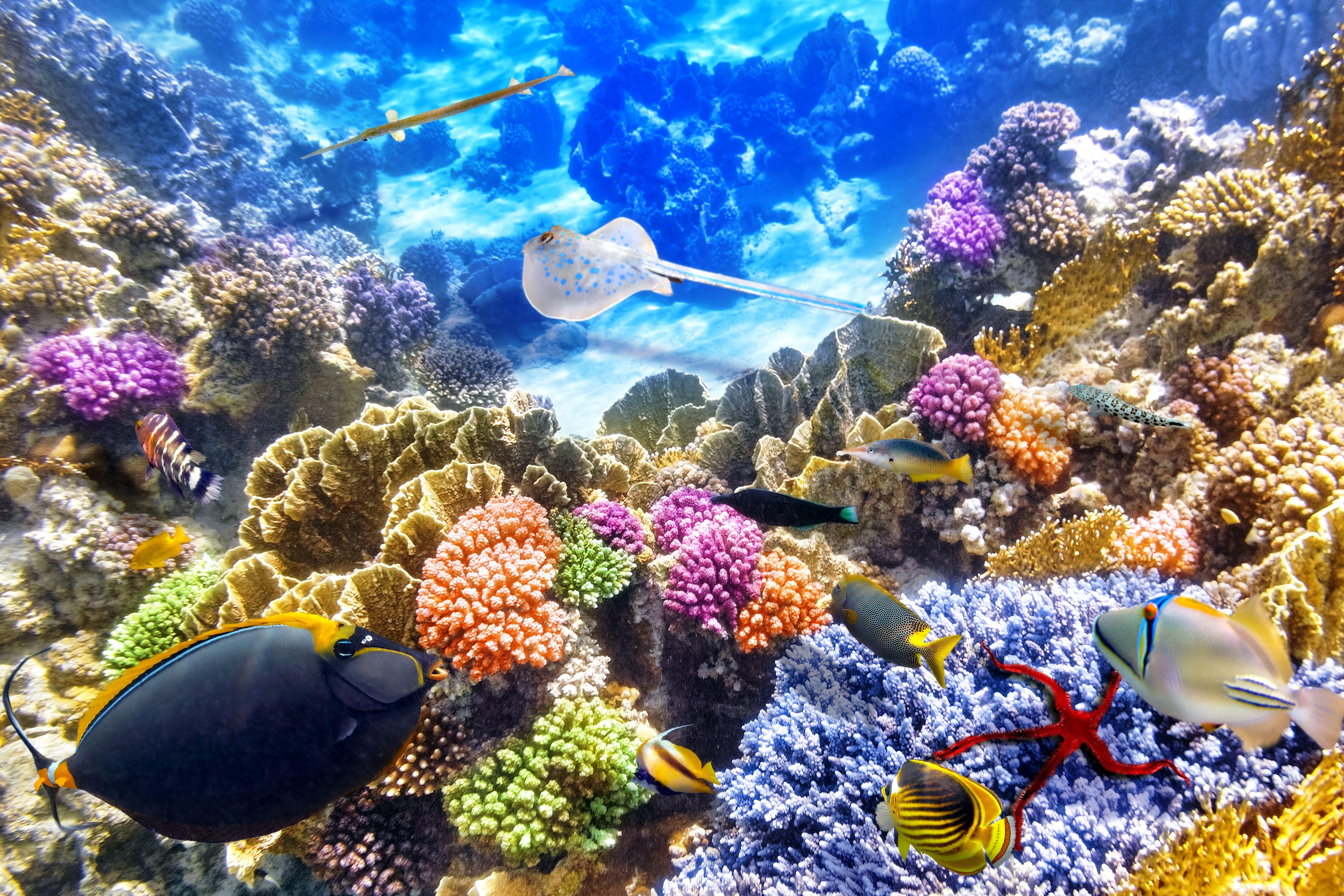 Great Barrier Reef Marine Park Wallpapers - Wallpaper Cave