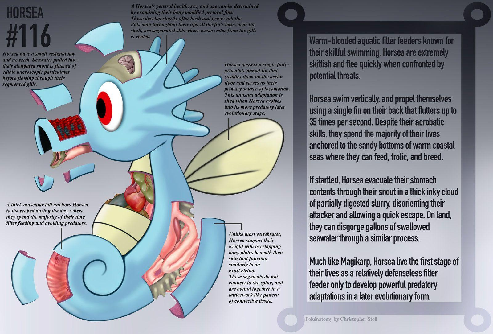 Horsea Anatomy- Pokedex Entry by Christopher-Stoll on DeviantArt