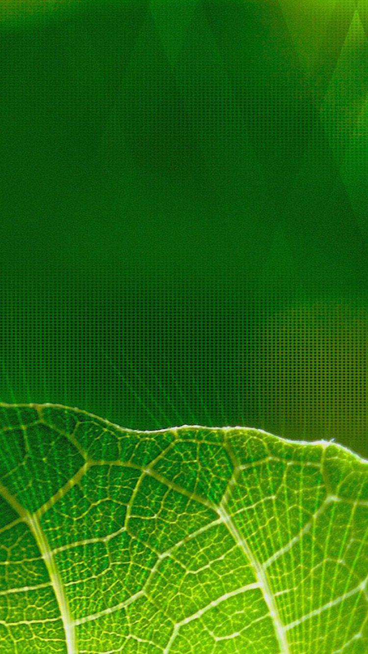 Green iPhone Wallpapers - Wallpaper Cave