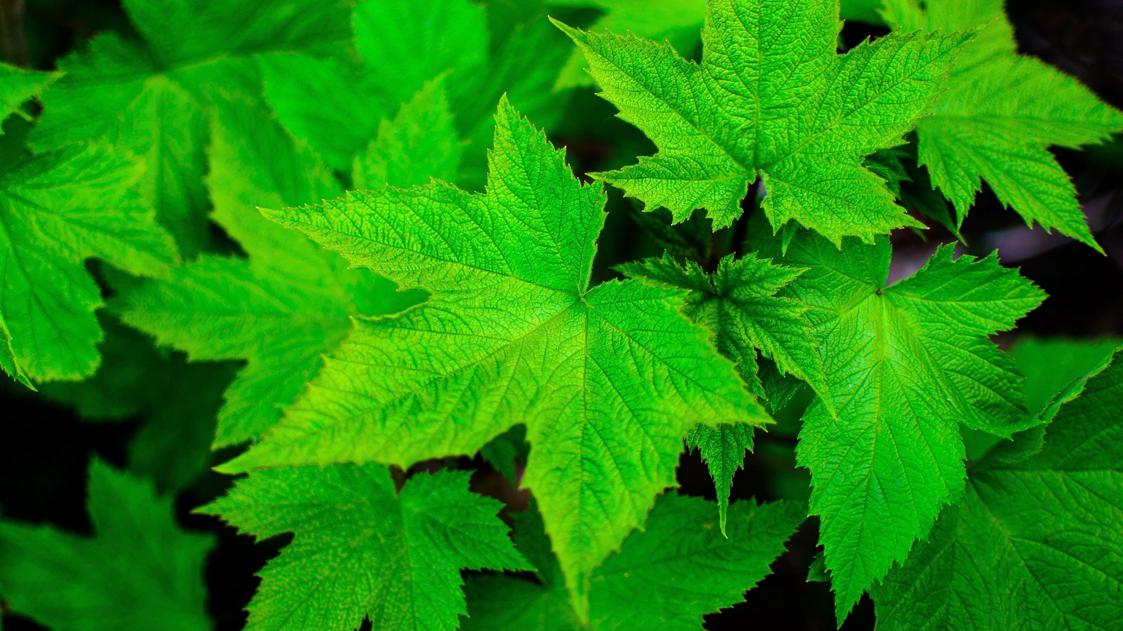 HD Wallpapers 1080p Green Nature