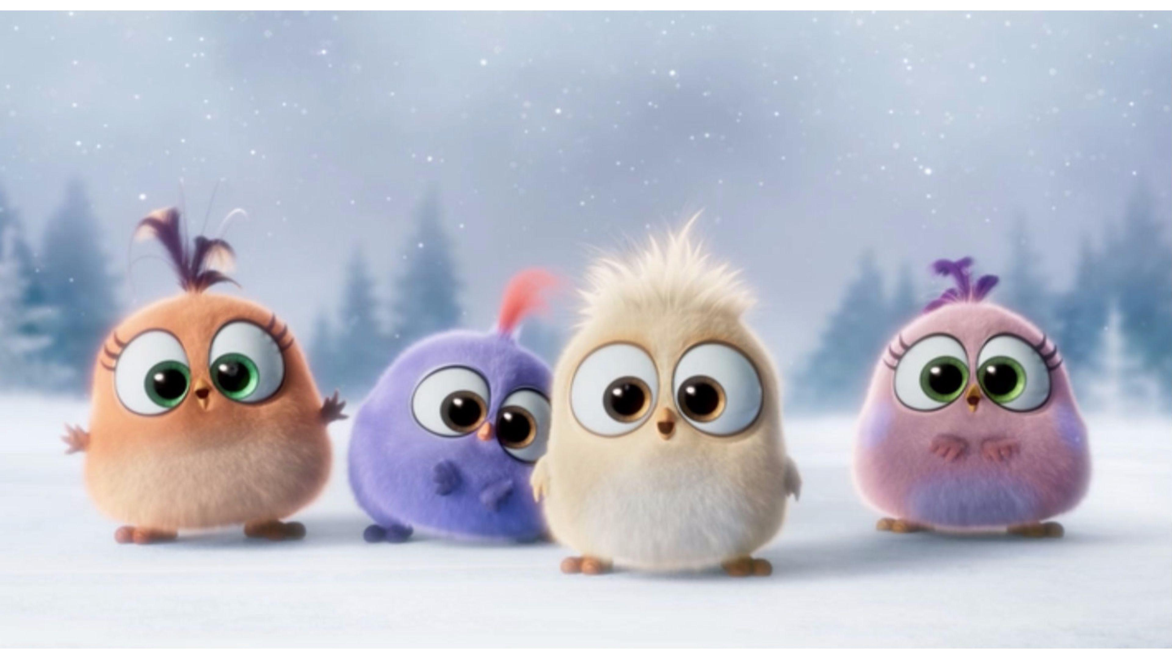 Cutest The Angry Birds Movie 4K Wallpaper