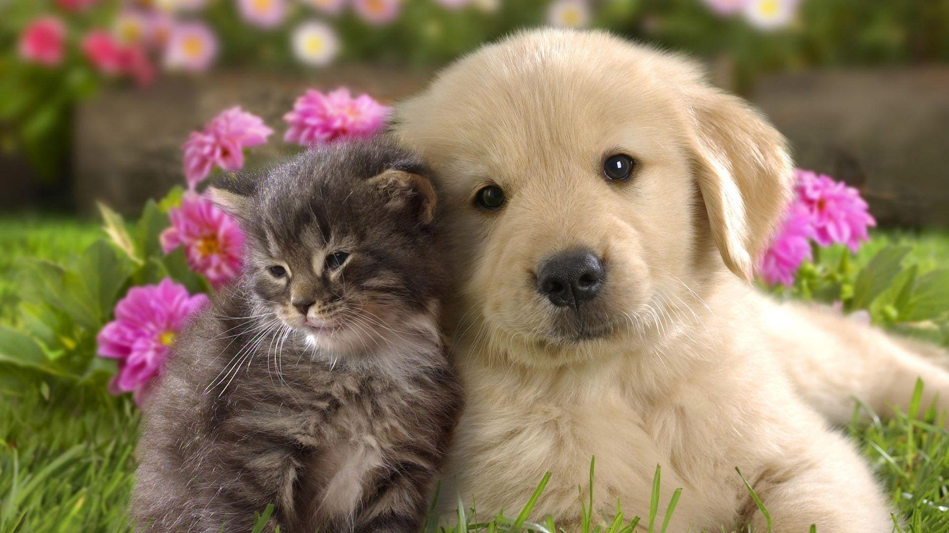 Puppy Hd Wallpapers Wallpaper Cave