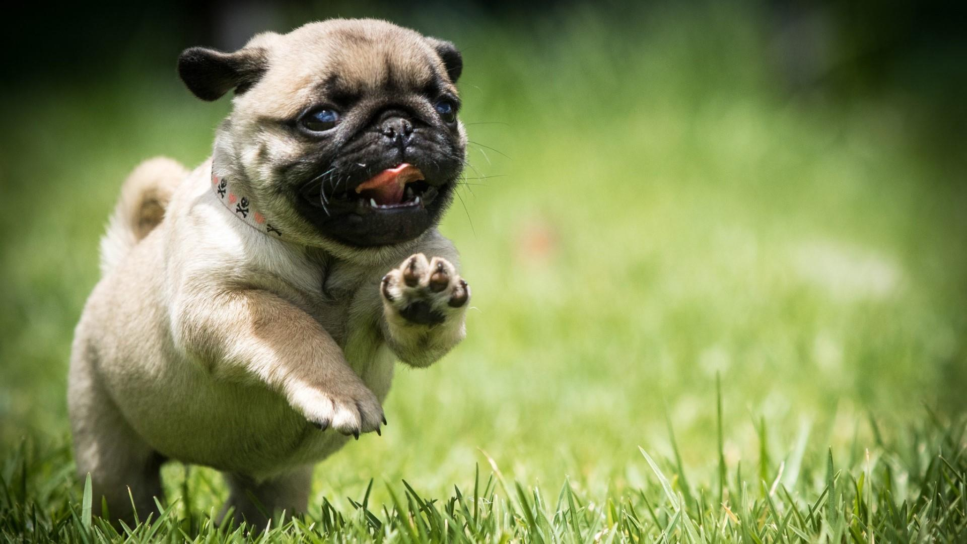 Puppy HD Wallpapers - Wallpaper Cave