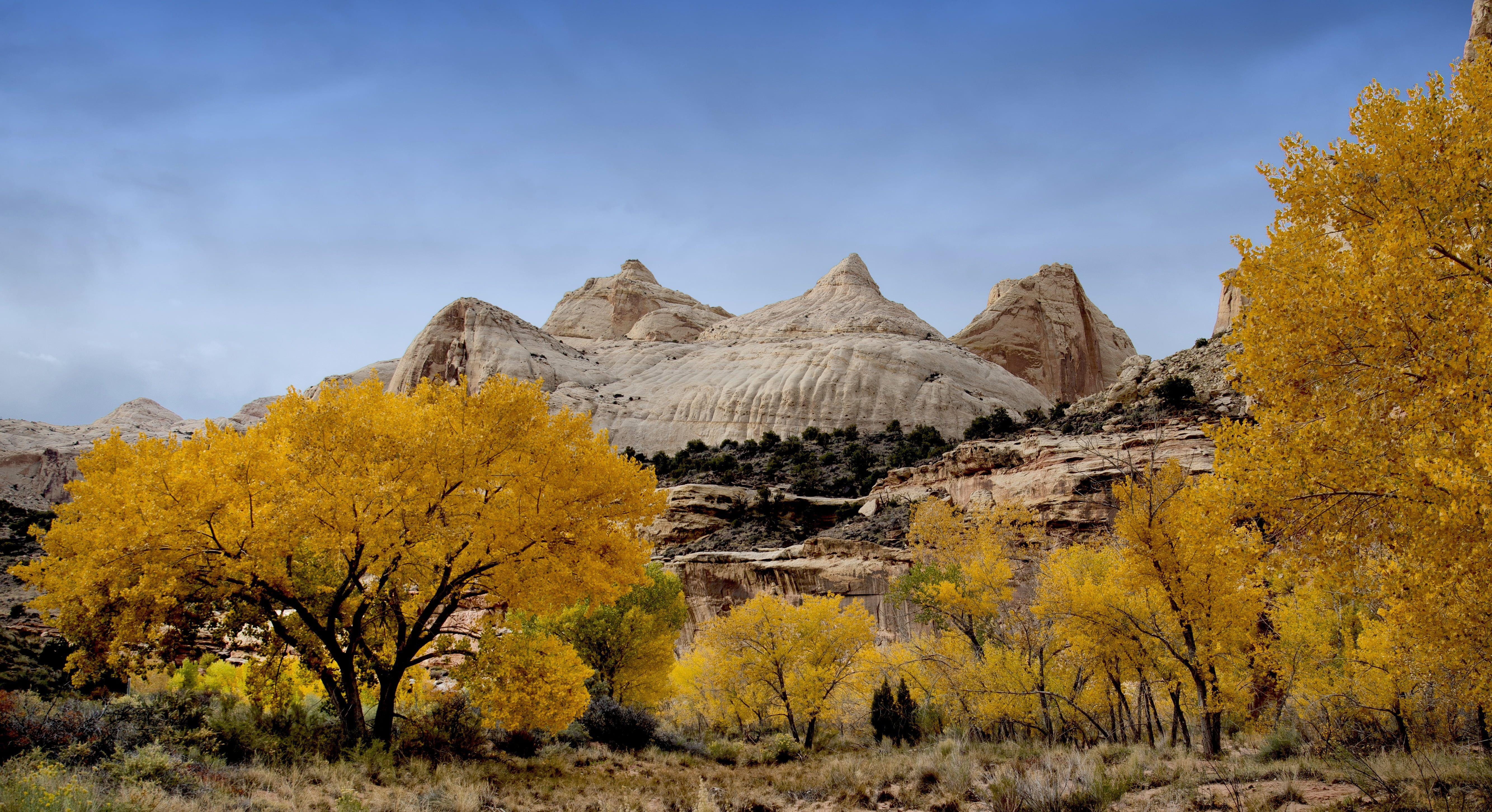 Trees and autumn and white stone mountain top, capitol reef HD