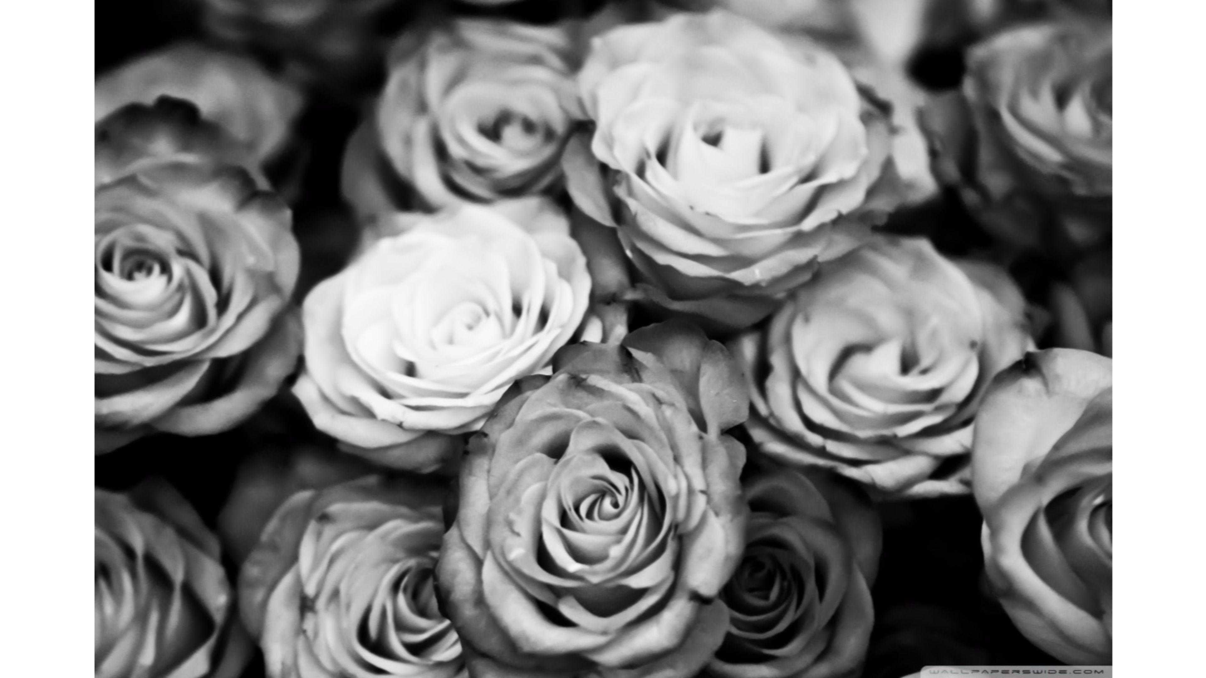 Black And White Rose Aesthetic 4k Wallpapers Wallpaper Cave