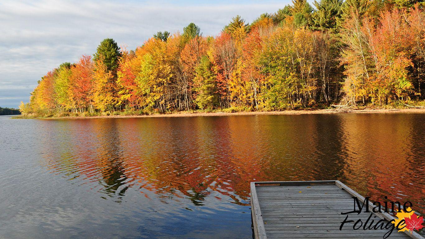 MaineFoliage: Photo Gallery: Foliage Wallpapers