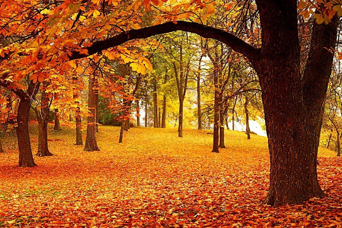 Forests: Fall Season Autumn Falling Trees Lovely Foliage Woods