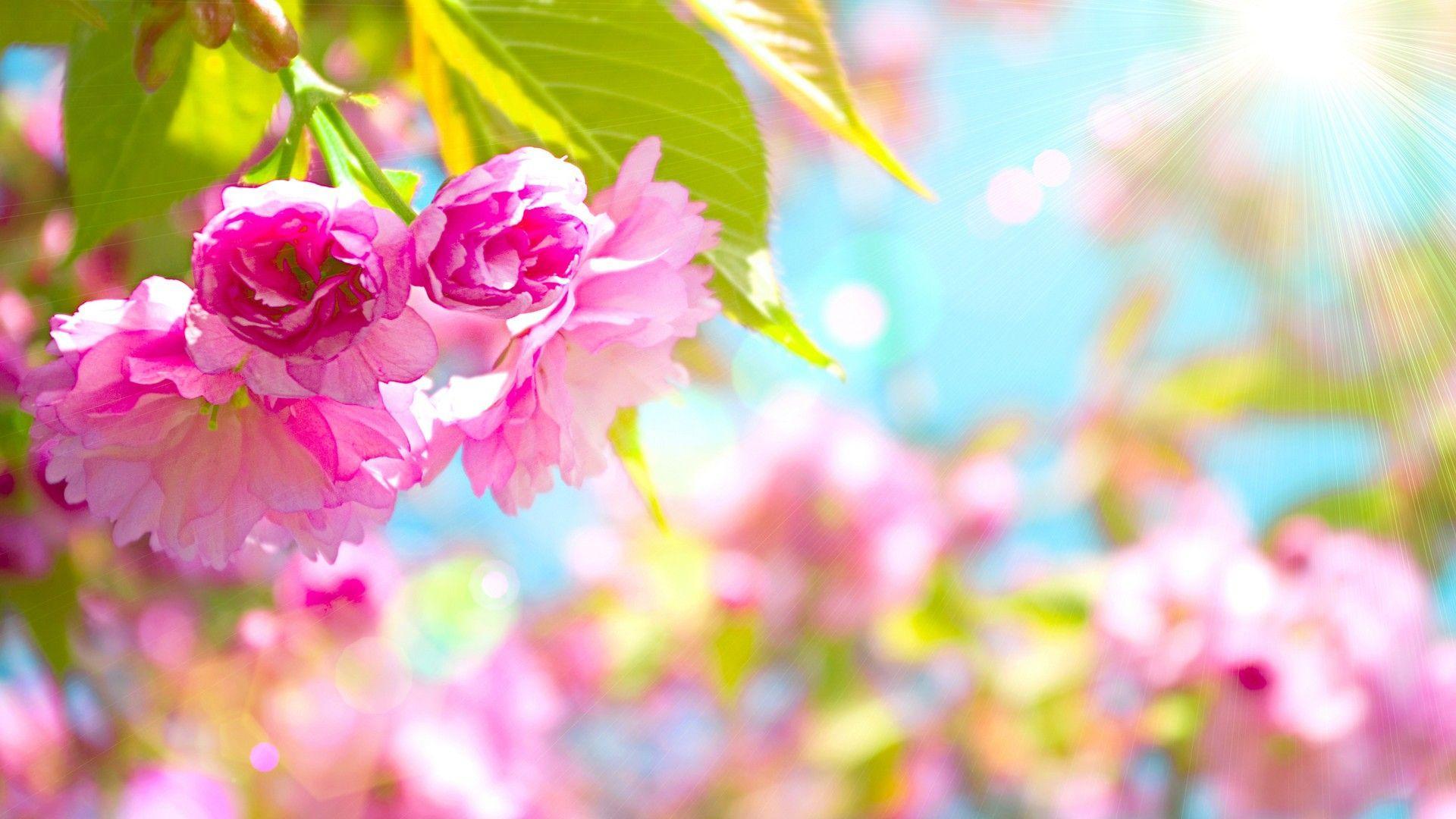 Spring flowers 2018 wallpapers wallpaper cave wallpapers spring flowers 2018 cute screensavers mightylinksfo
