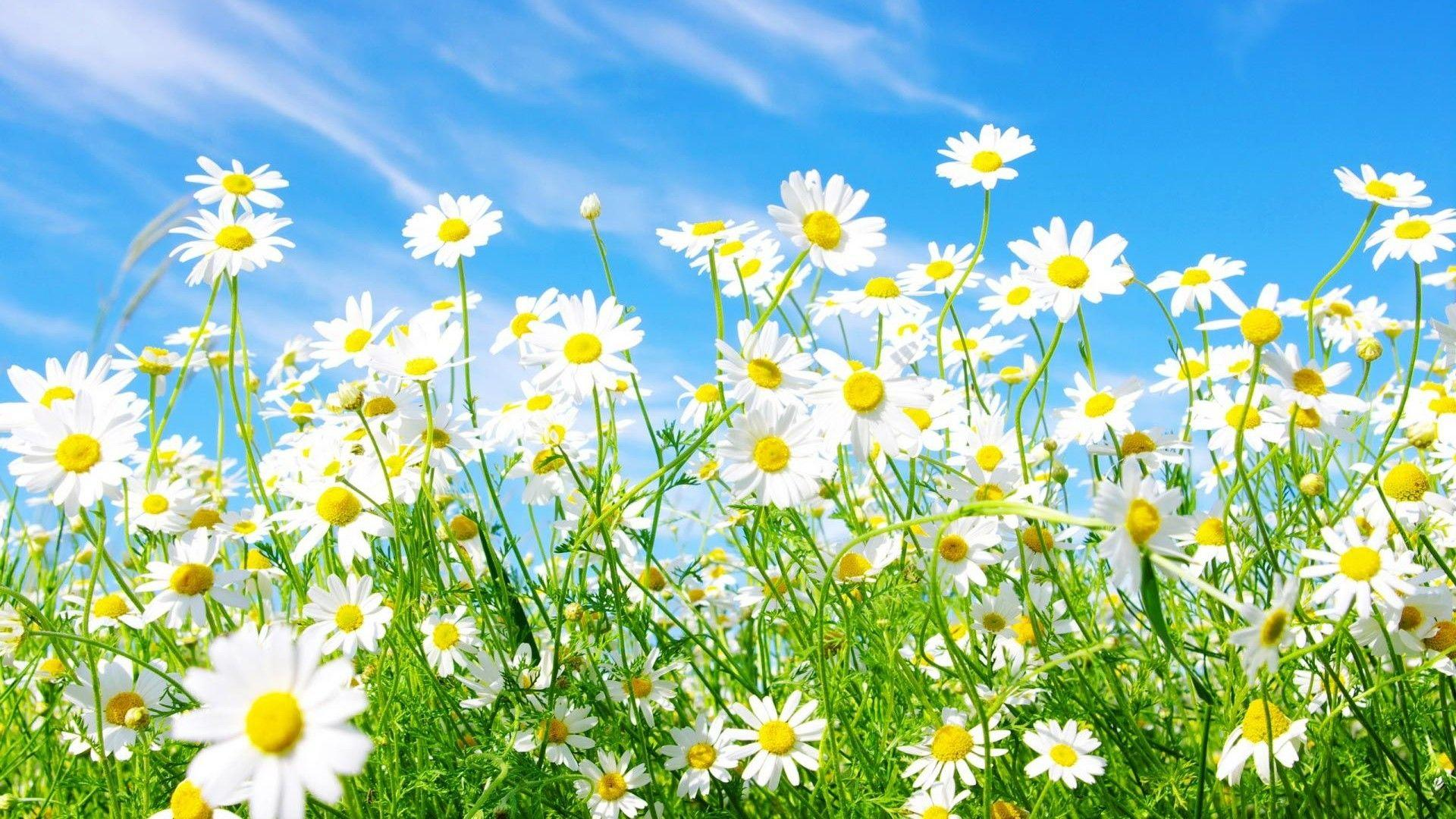 HD Spring Flowers Backgrounds