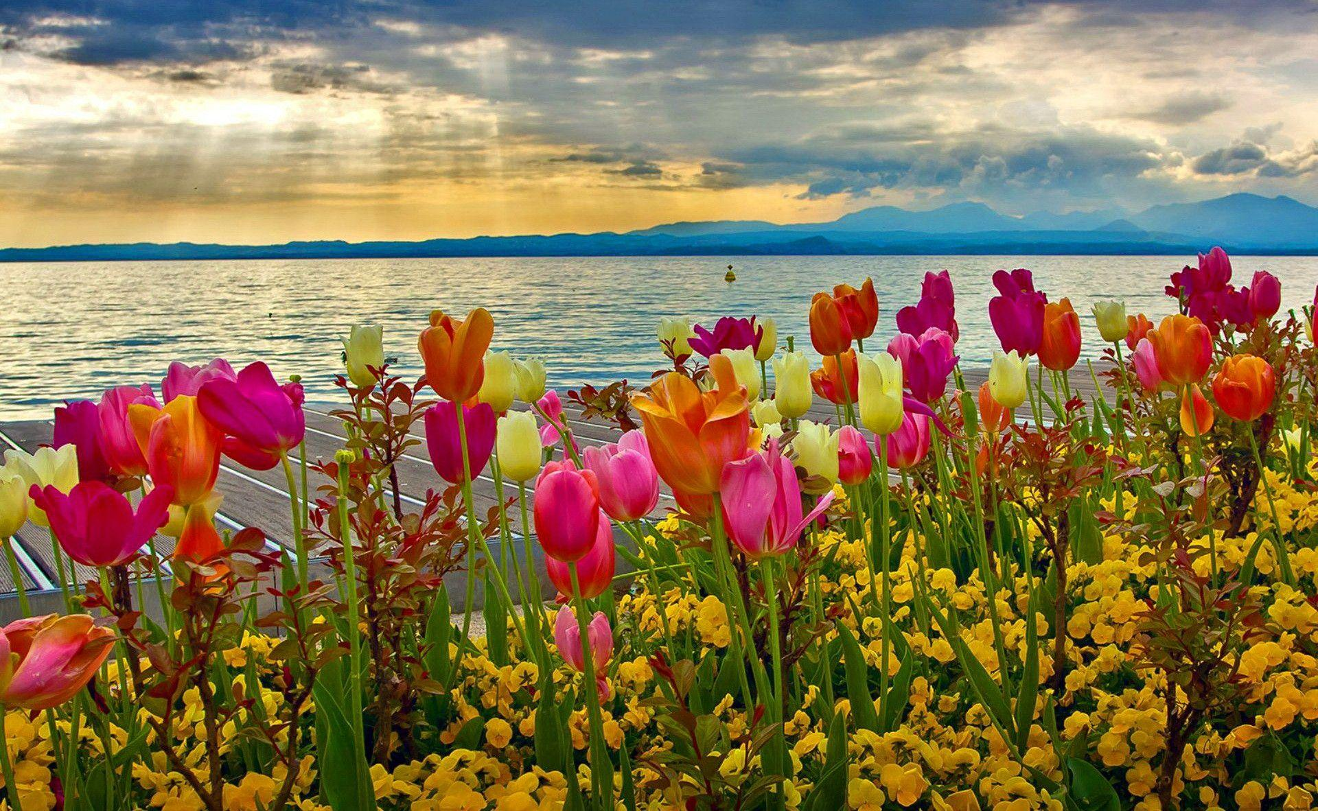 Spring flowers 2018 wallpapers wallpaper cave cool spring wallpaper for desktop 2 diariovea mightylinksfo