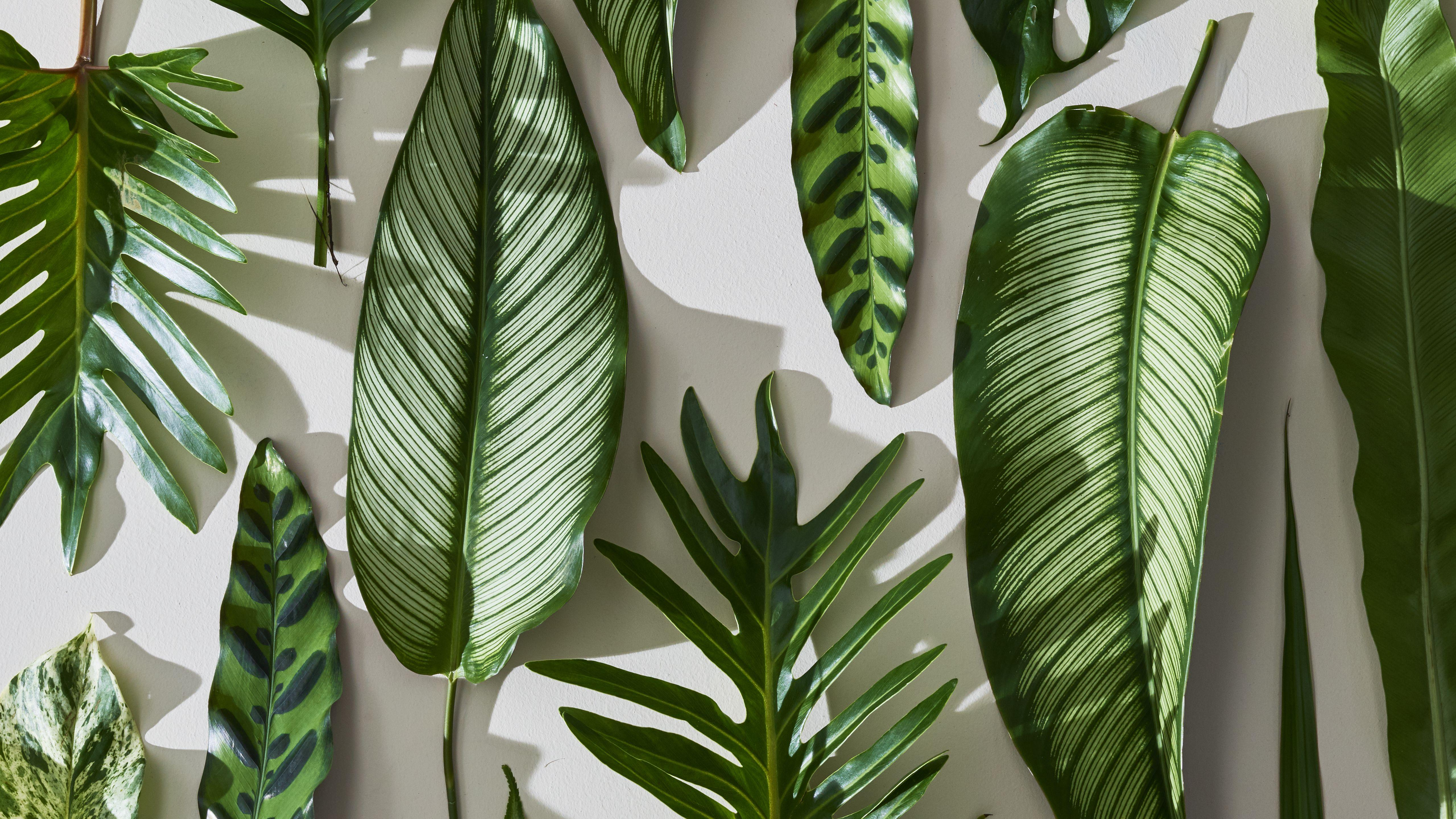 Palm Leaves Wallpapers - Wallpaper Cave