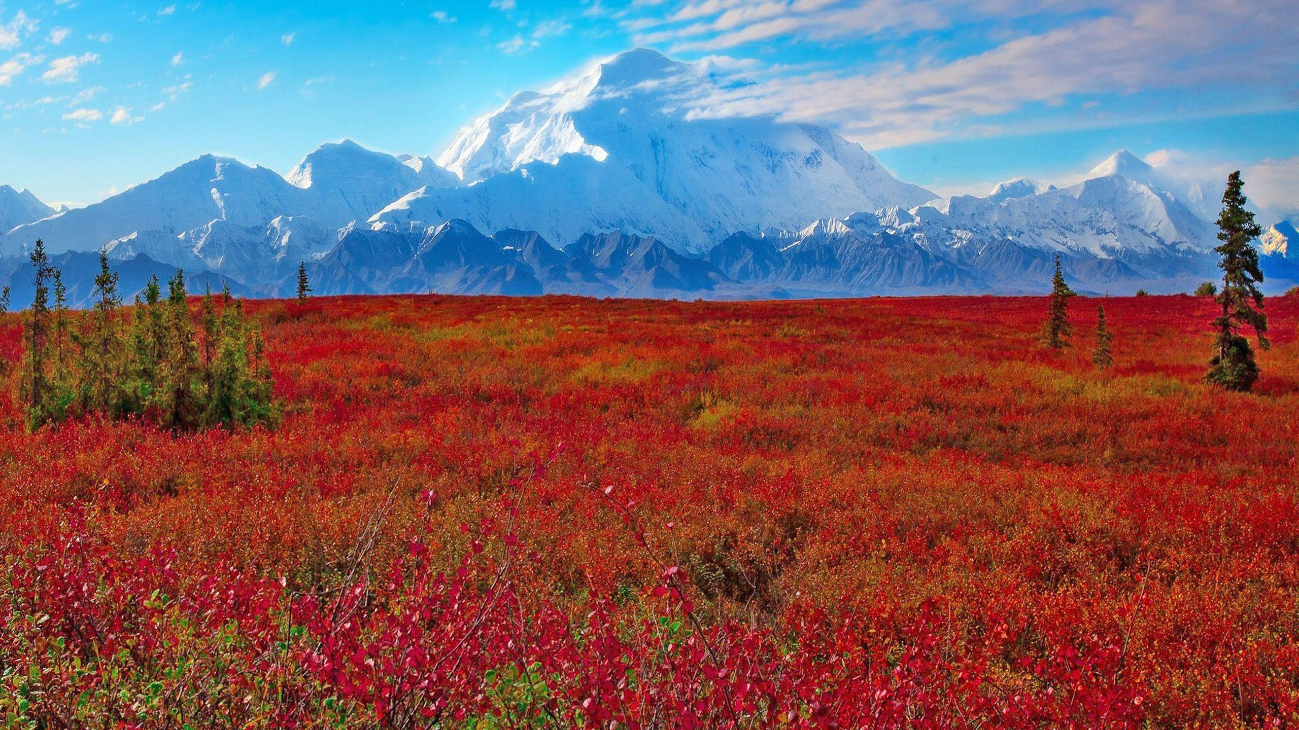 Denali National Park And Preserve, Ak, United States