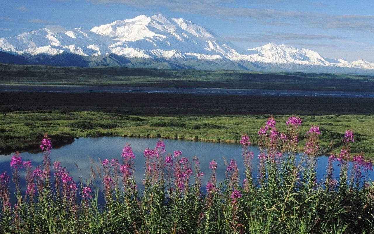 alaska summer mountains and fireweed