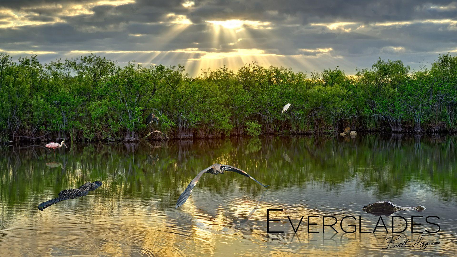 18+ Best HD Everglades National Park Wallpapers