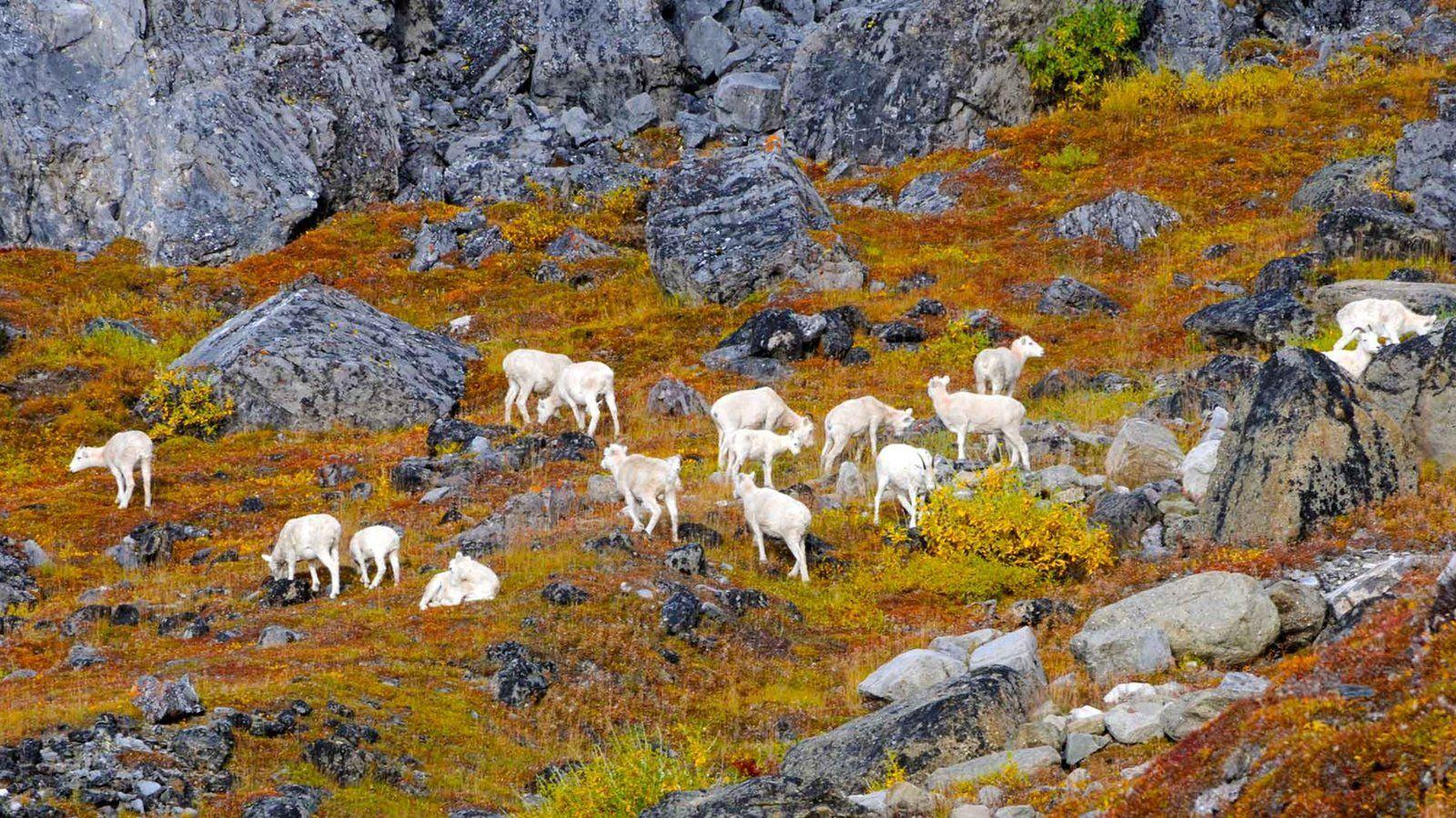 Animal Pictures: View Image of Gates of the Arctic National Park