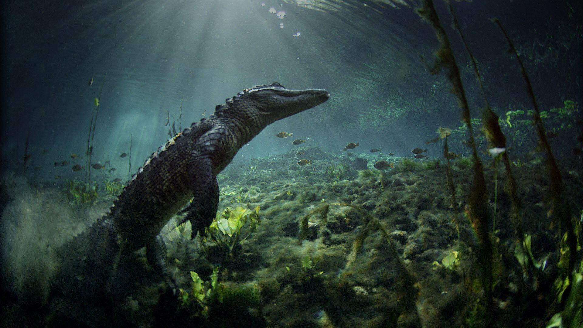Meet the Residents of Everglades National Park