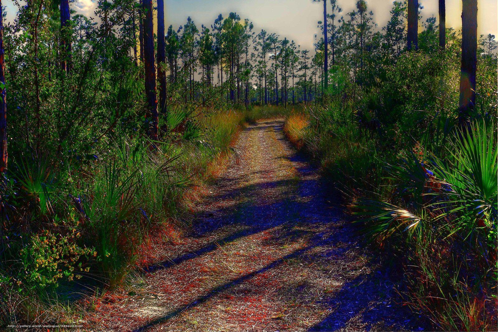 Download wallpapers everglades national park, florida, road, trees