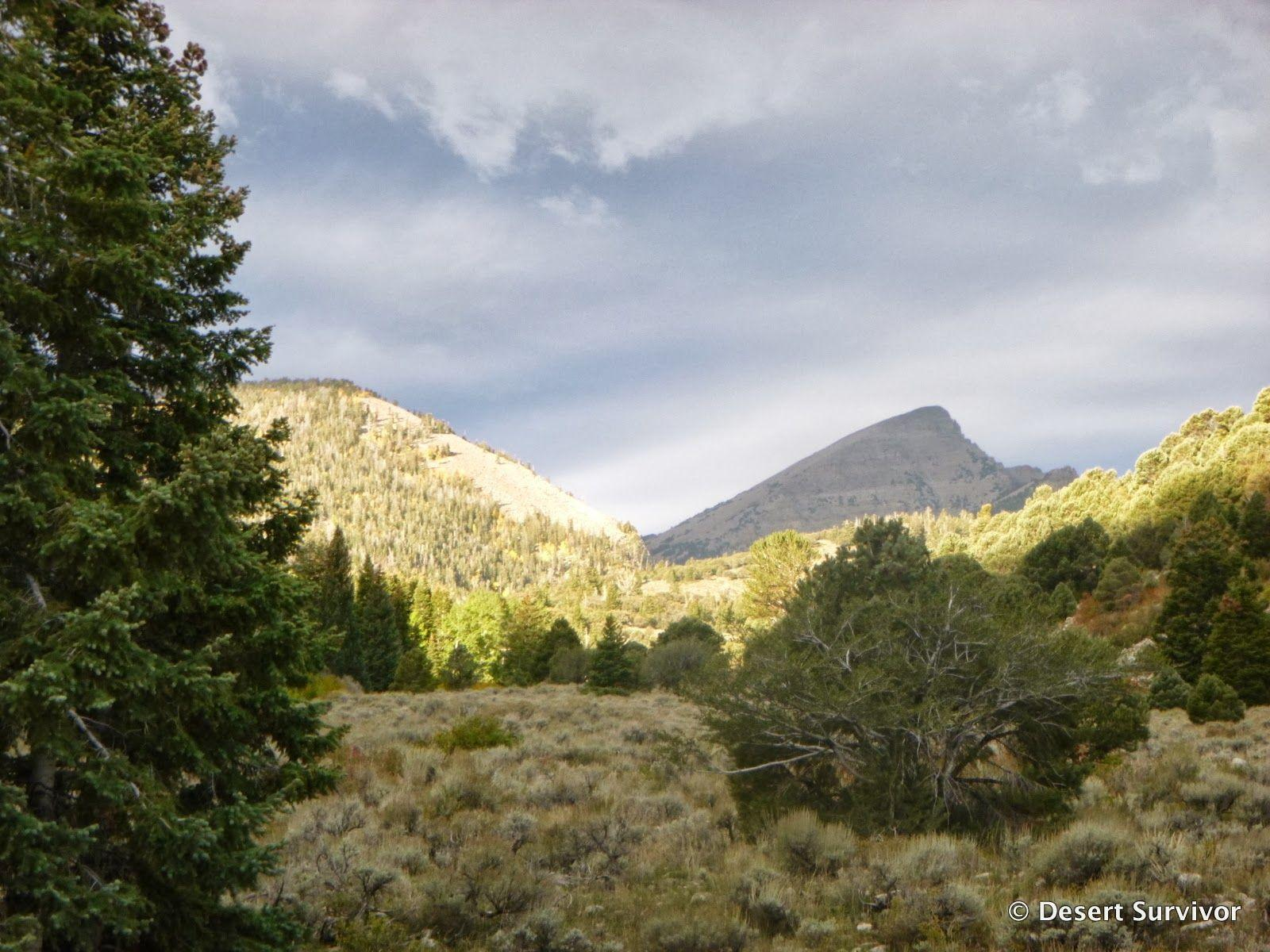 Desert Survivor: Hike to Baker Lake in Great Basin National Park