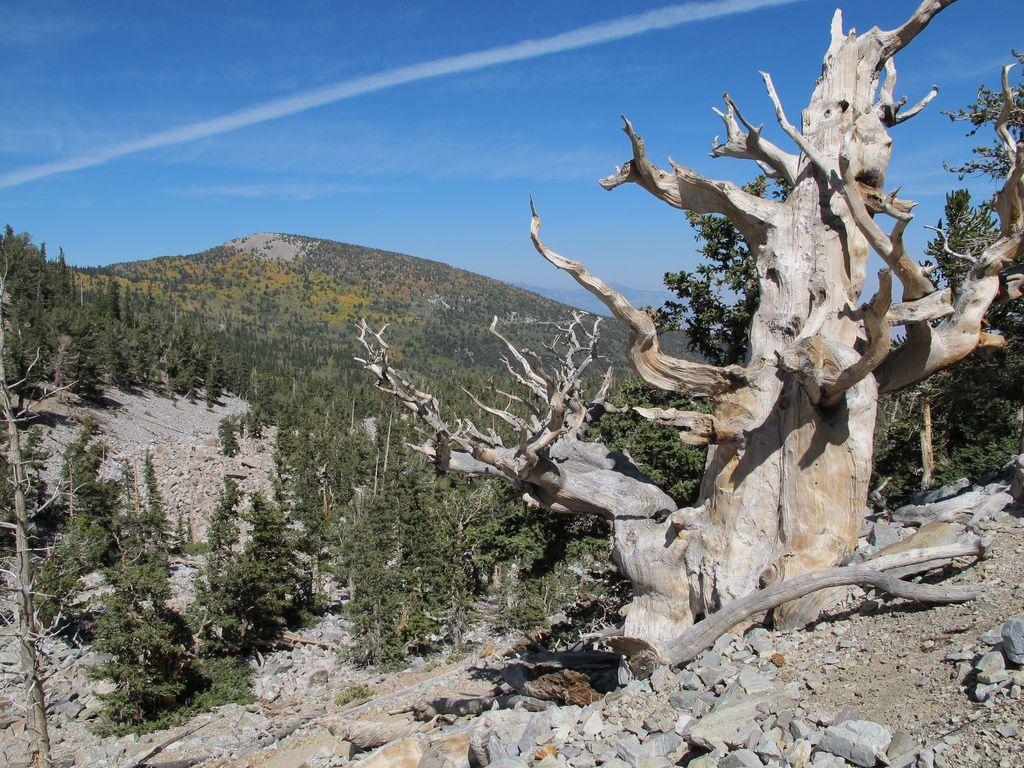40 Georgeous Photos of Great Basin National Park in Nevada