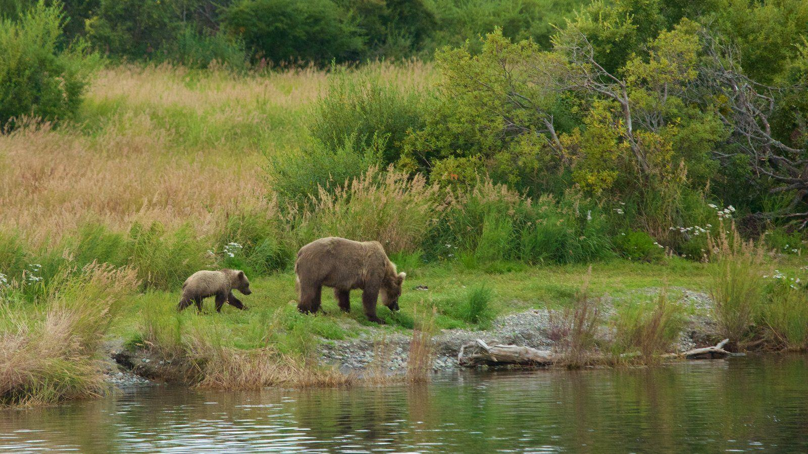 Animal pictures: View image of Katmai National Park and Preserve
