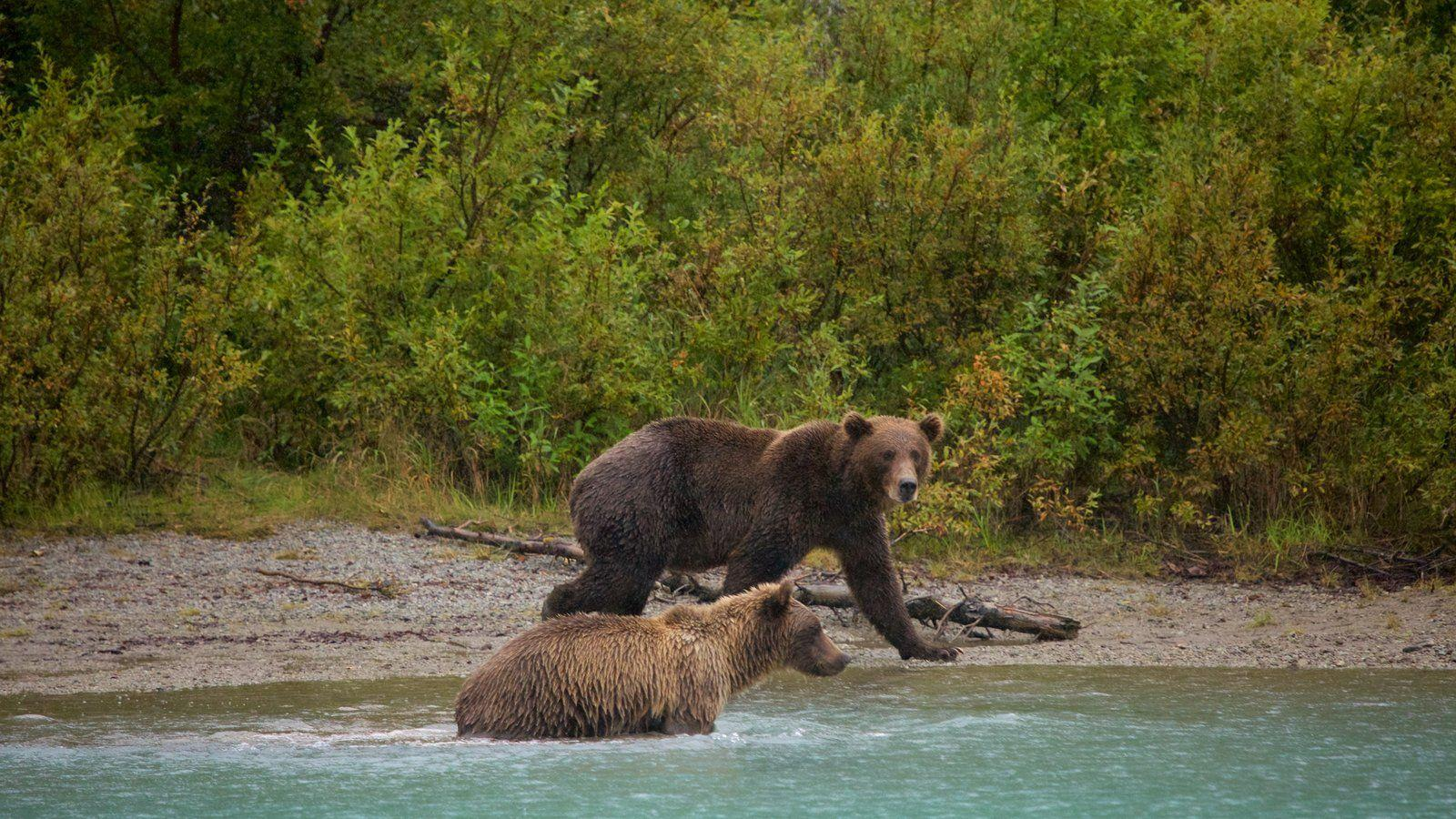 Animal Pictures: View Image of Southwest Alaska