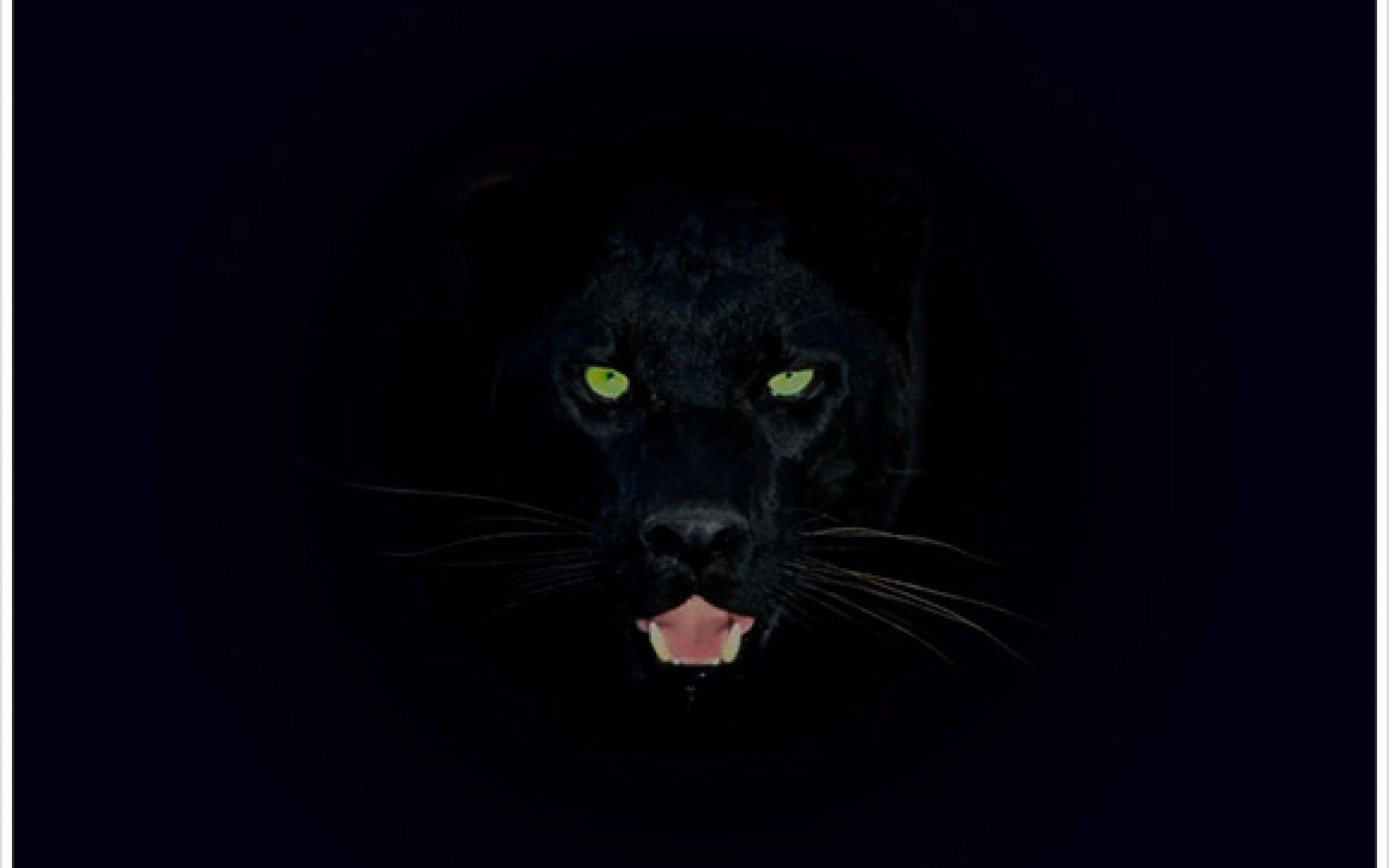 Black Panther Logo Wallpapers Wallpaper Cave