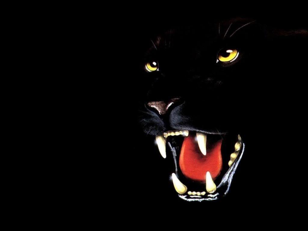 Black Panther Animal Wallpapers ...