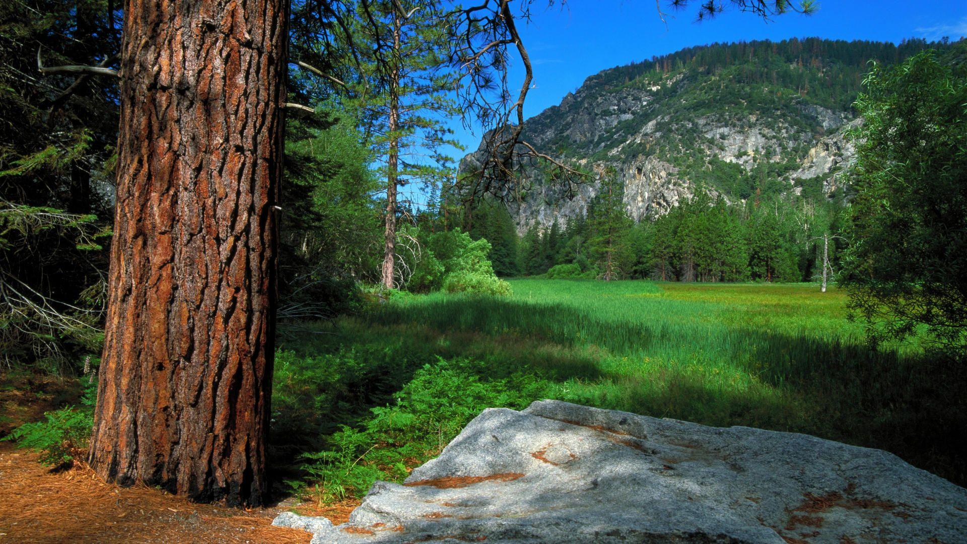 Zumwalt Meadow Trail, Sequoia and Kings Canyon National Parks