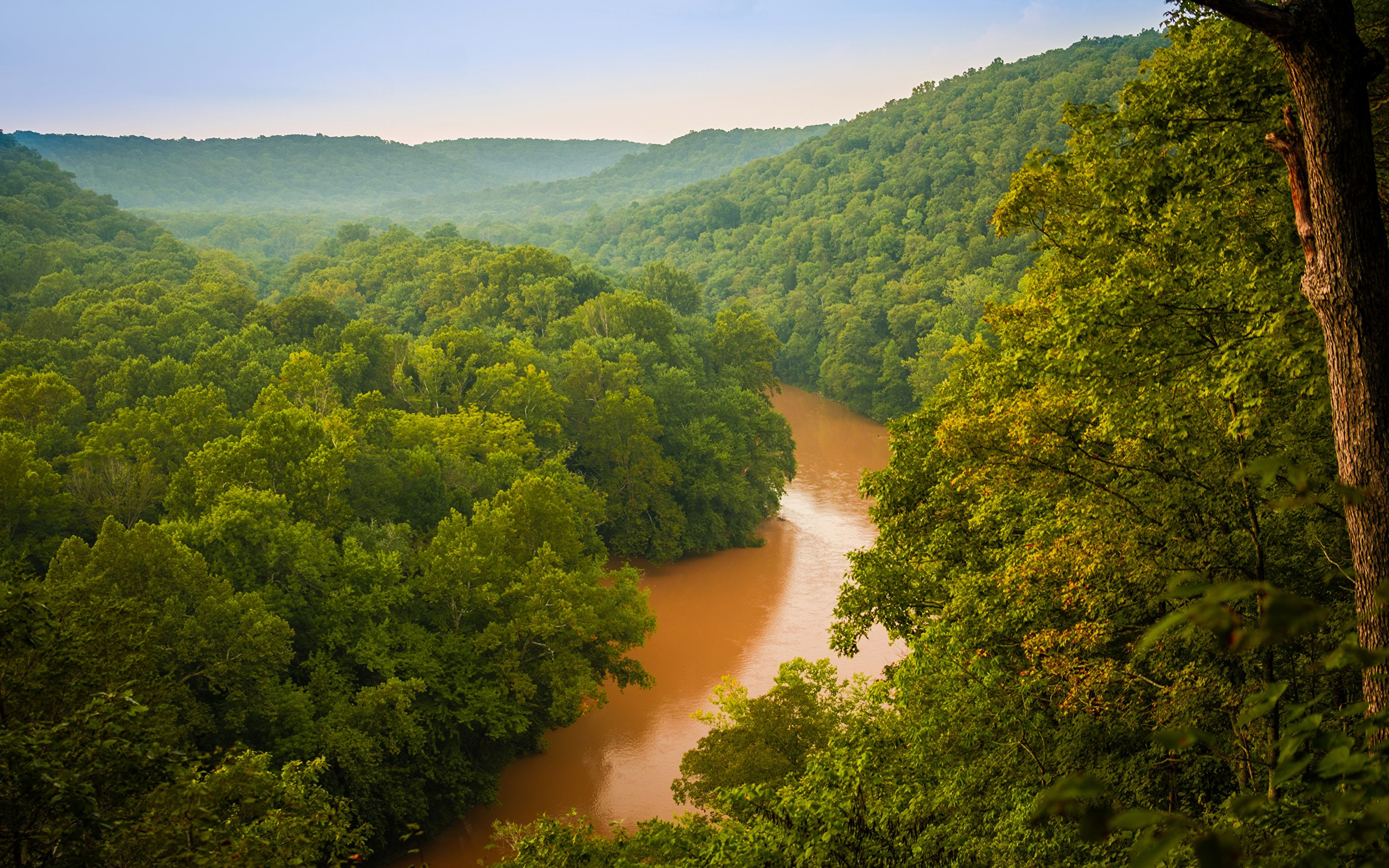 Image USA Mammoth Cave National Park Nature Parks Forests 2880x1800