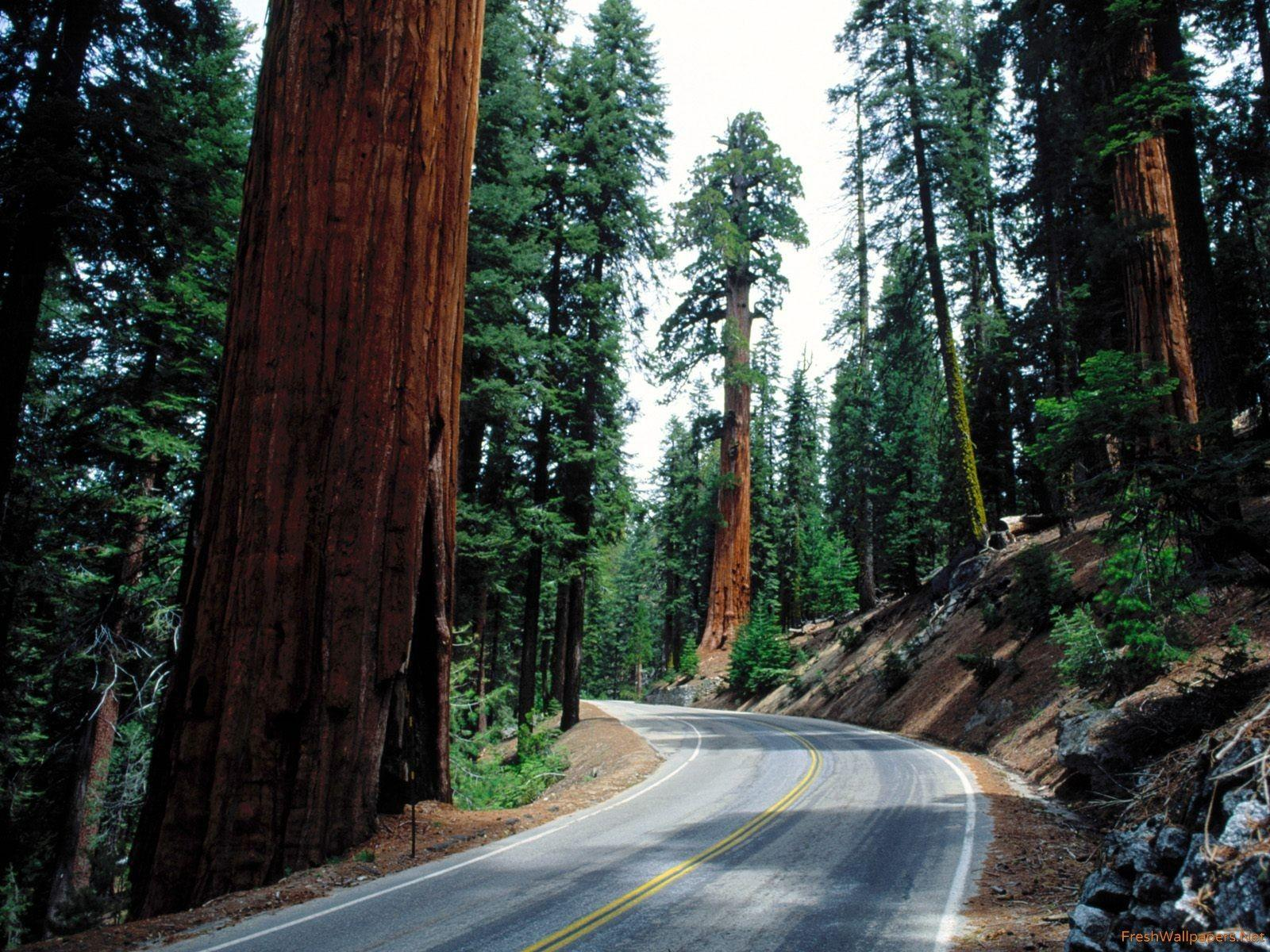 Redwood Road, Sequoia National Park wallpapers