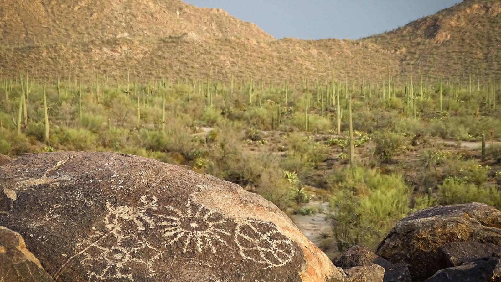 What Happens When the Saguaros Disappear? · National Parks