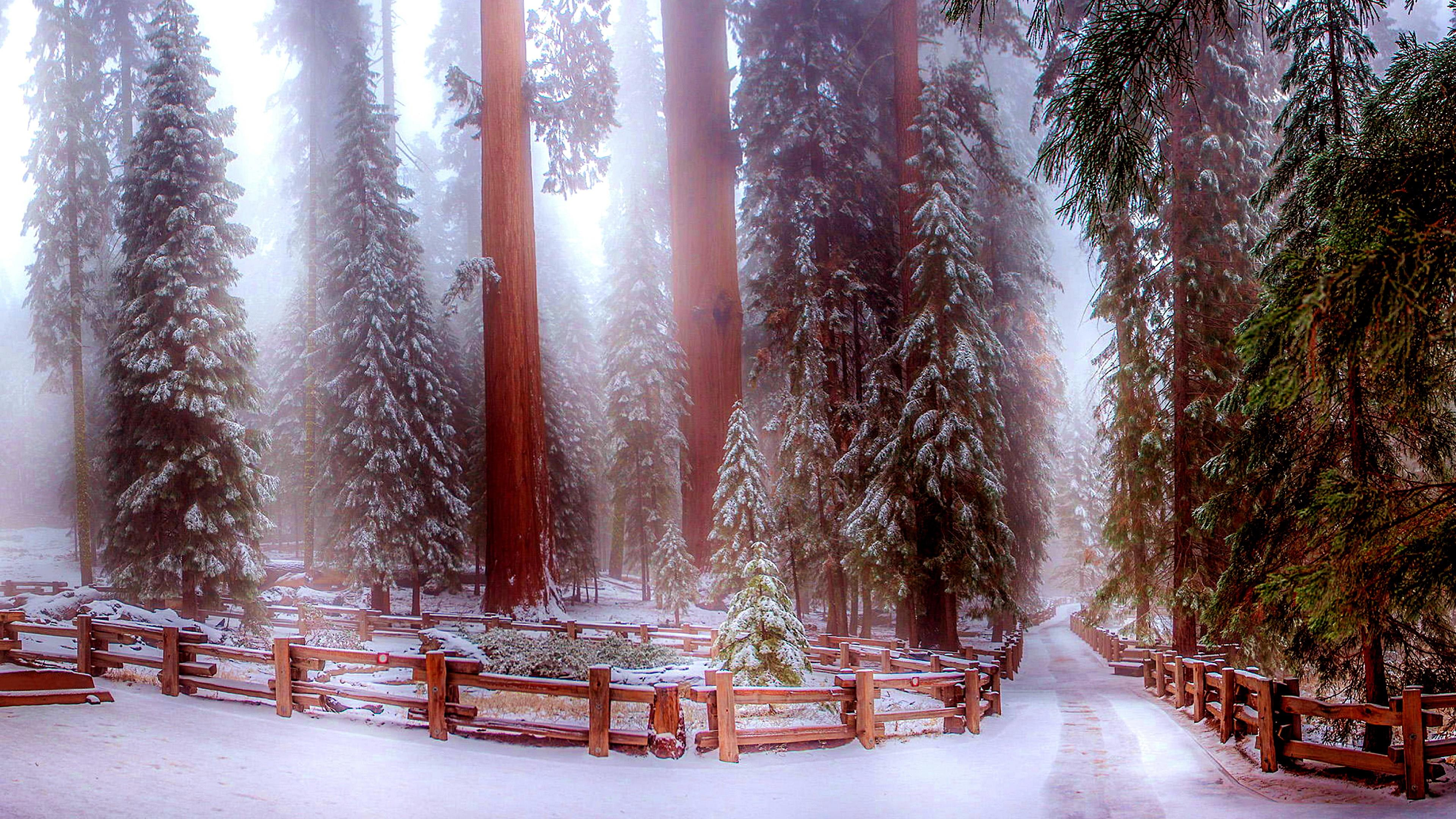 Sequoia National Park In Winter Wallpapers