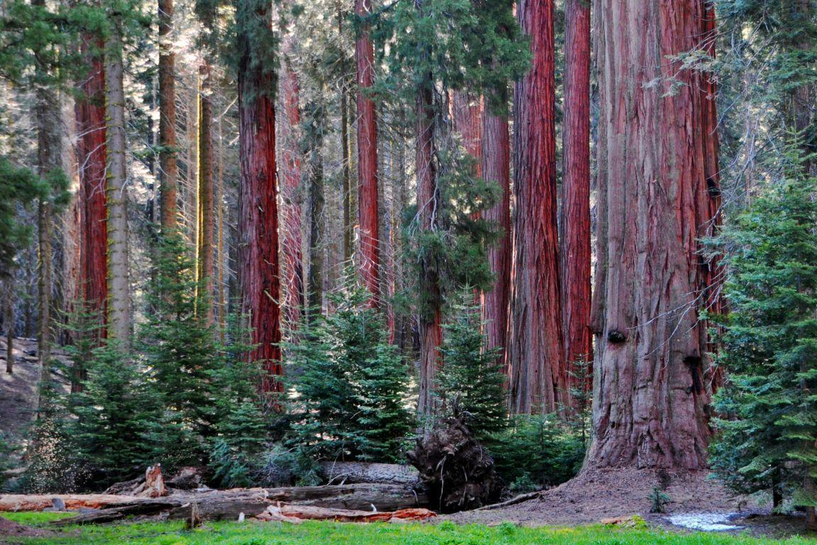 Sequoia and Kings Canyon National Park Slideshow Photo 30 of 55