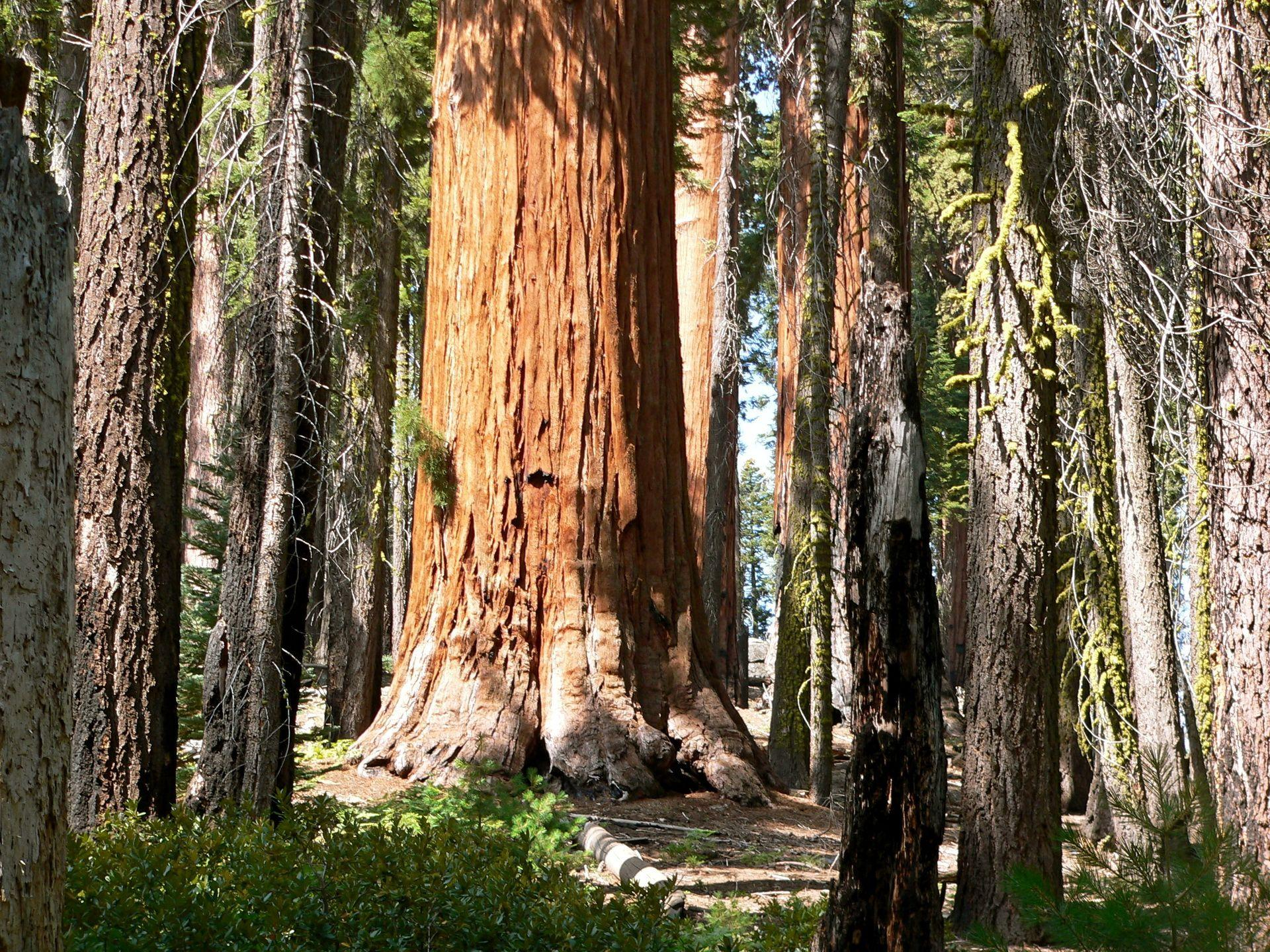 Sequoia national park California Nature Forests 1920x1440