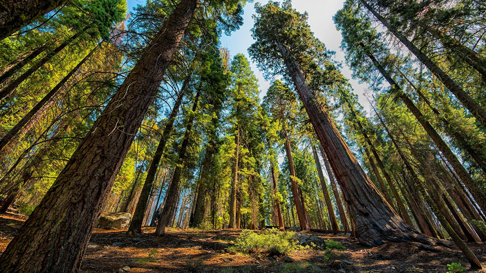 Photos USA Bottom view Sequoia and Kings National Park 1920x1080