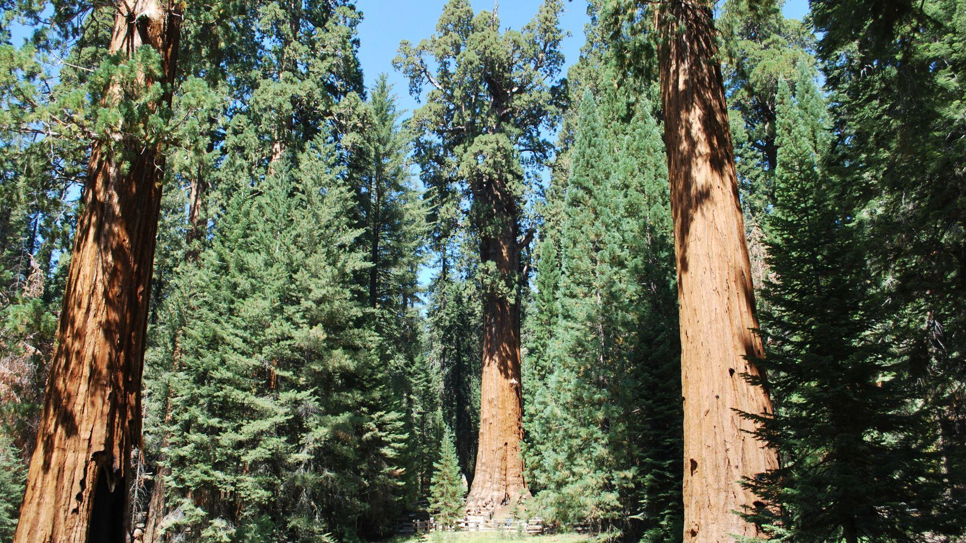 Sequoia National Park Wallpapers High Quality