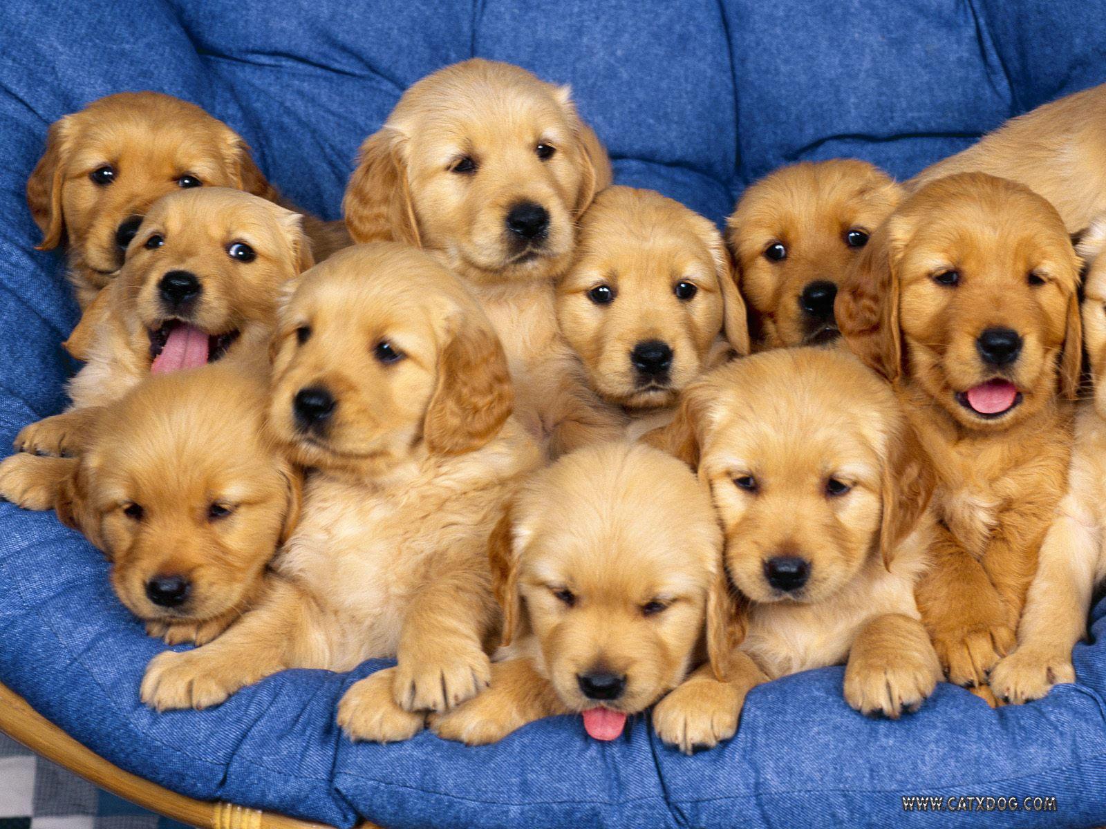 Mix Puppies Wallpapers Wallpaper Cave
