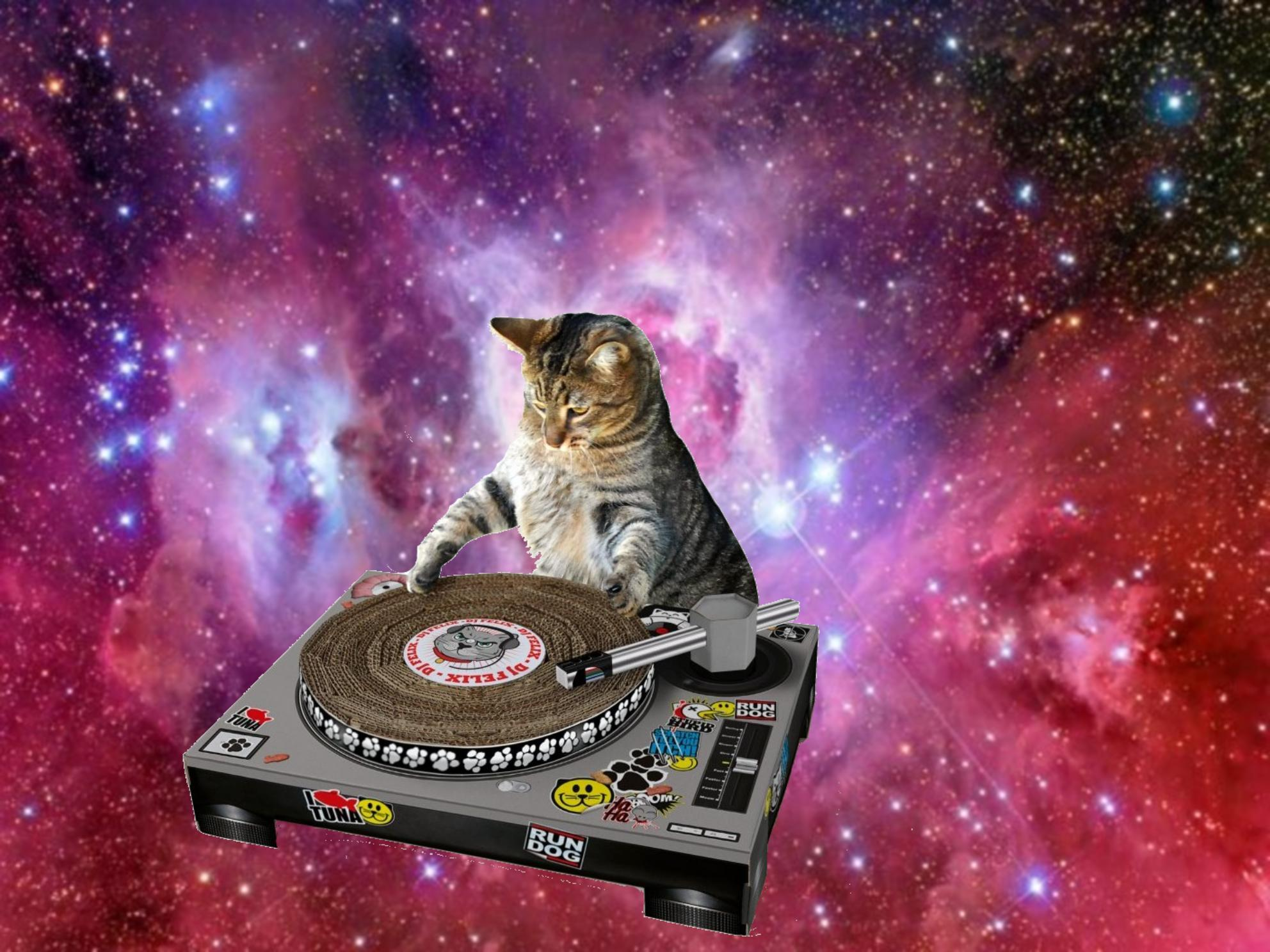 Galaxy Cat Wallpaper 1984x1488